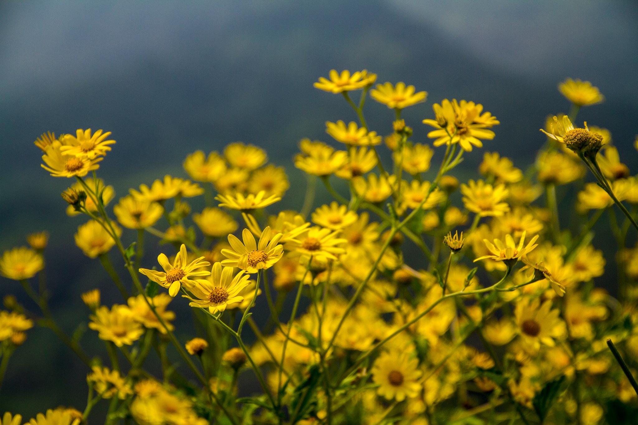 Beautiful Flowers  by Amit K