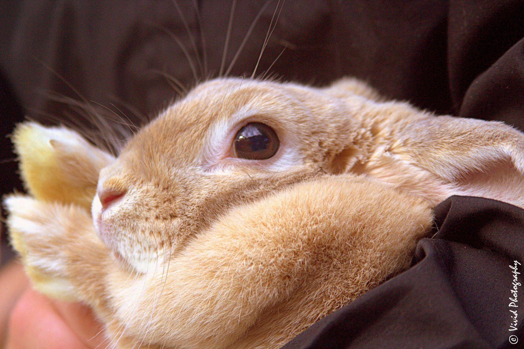 Snuggle Bunny by Judee Schofield