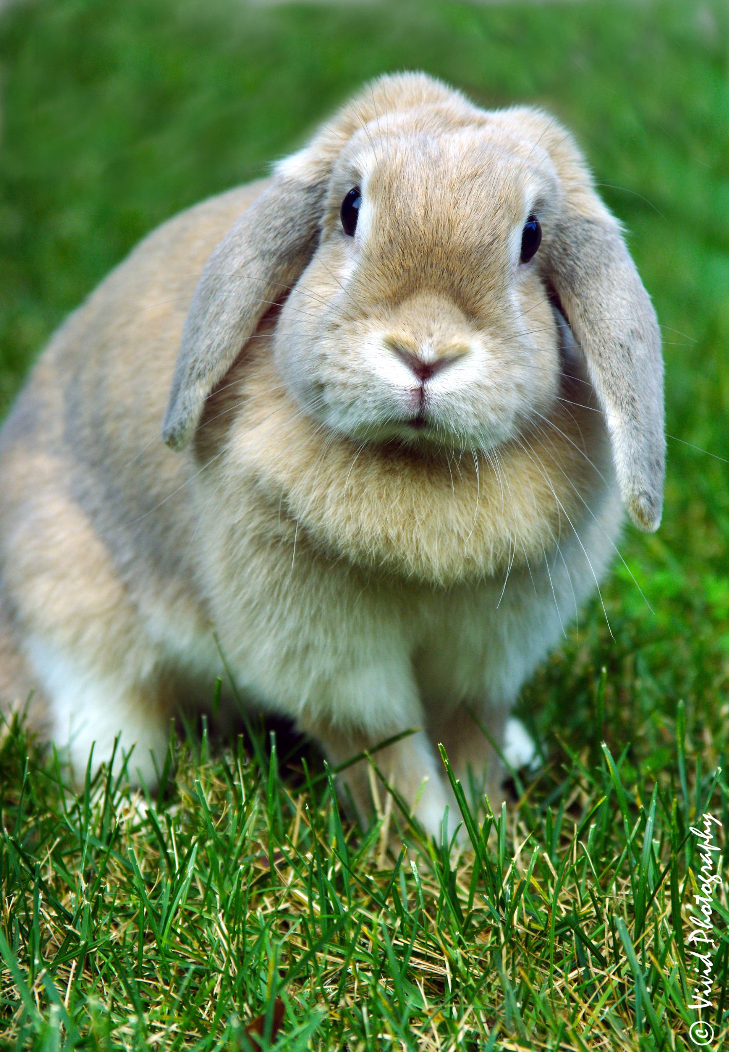 Some Bunny Love Me? by Judee Schofield