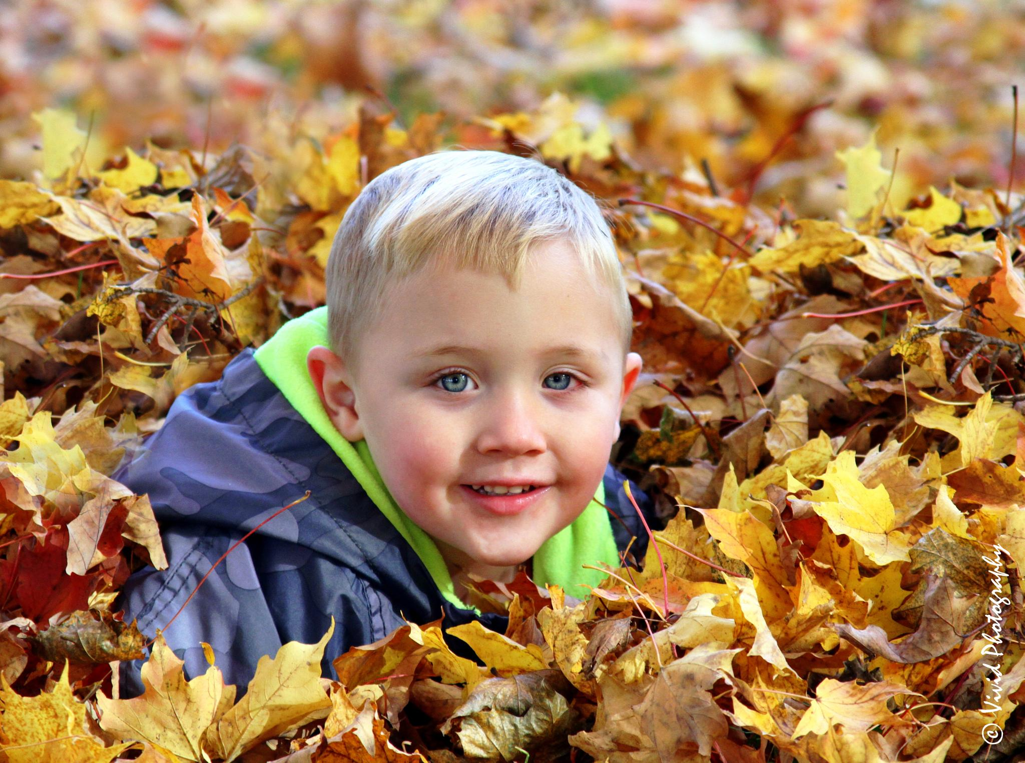 Autumn Leaves Colourful Playground  by Judee Schofield
