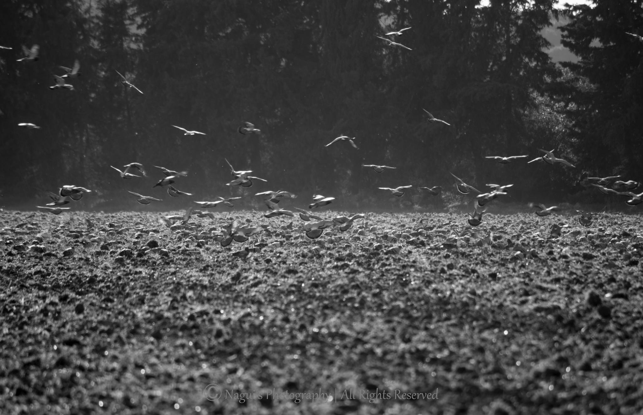 birds  by Ana Nagui