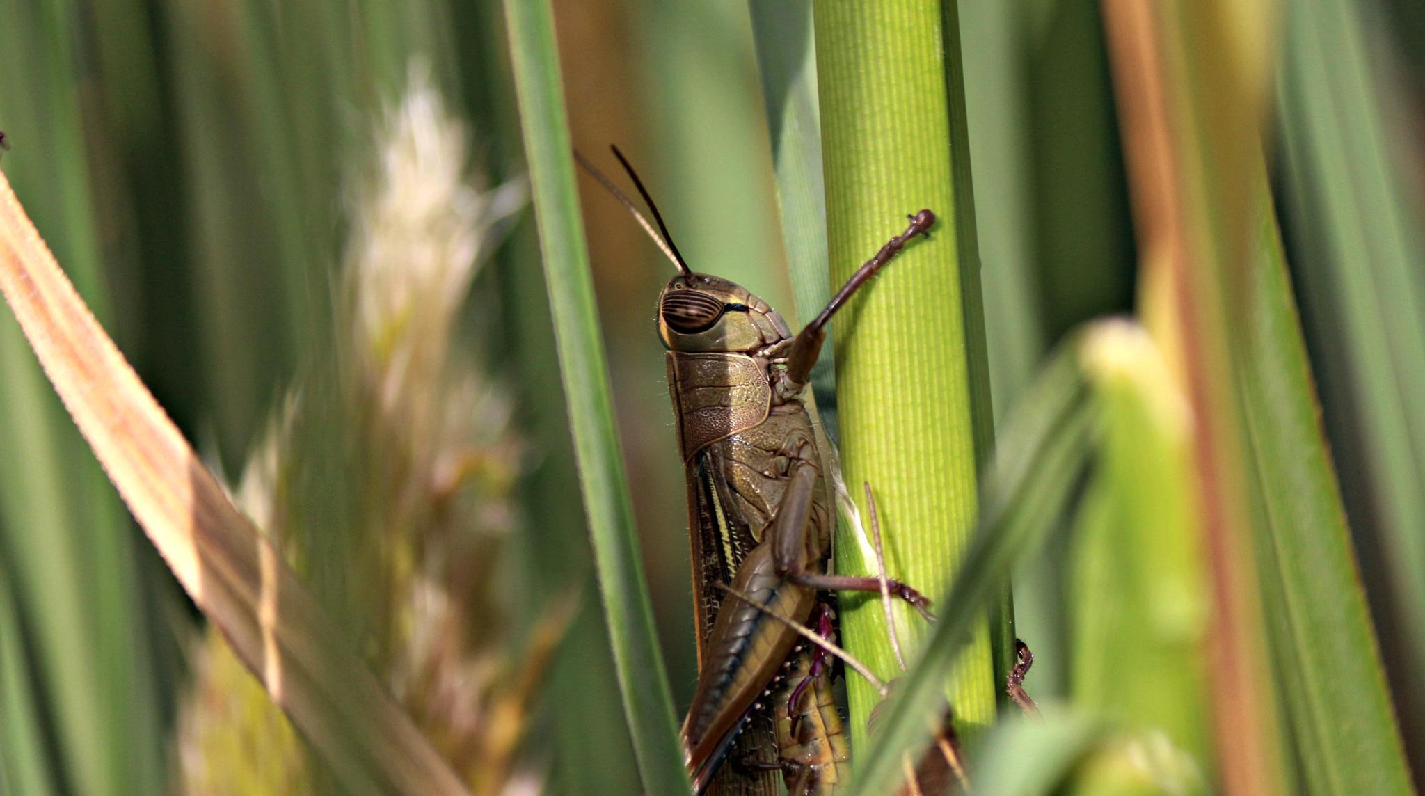 Mr Cricket by Miranda Askwith