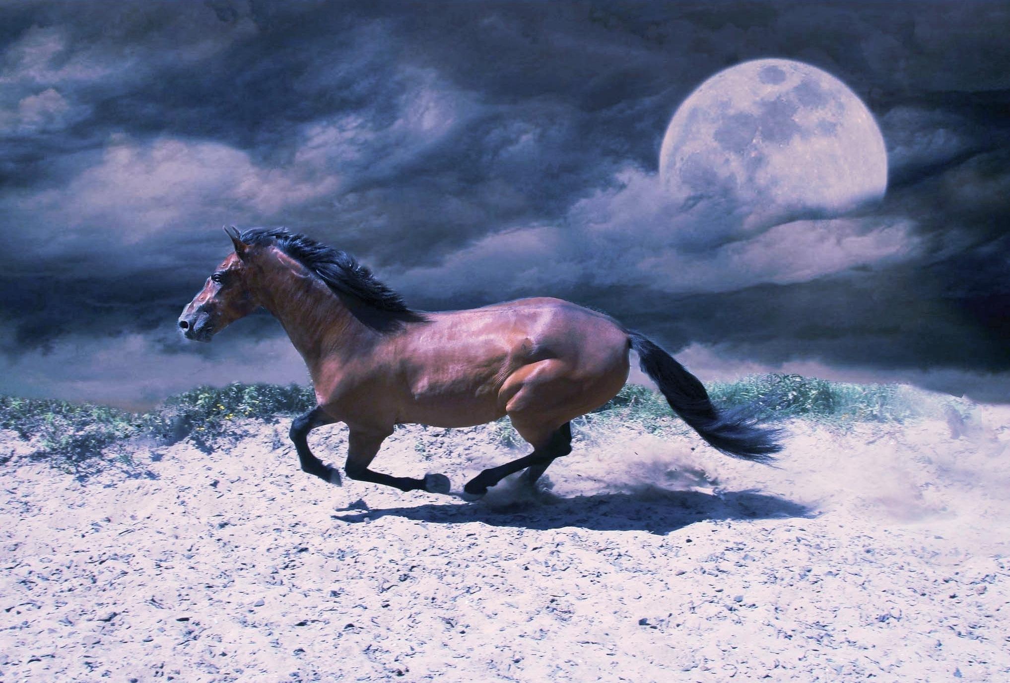 Andalusian horse at moonlight run by Carin Klabbers