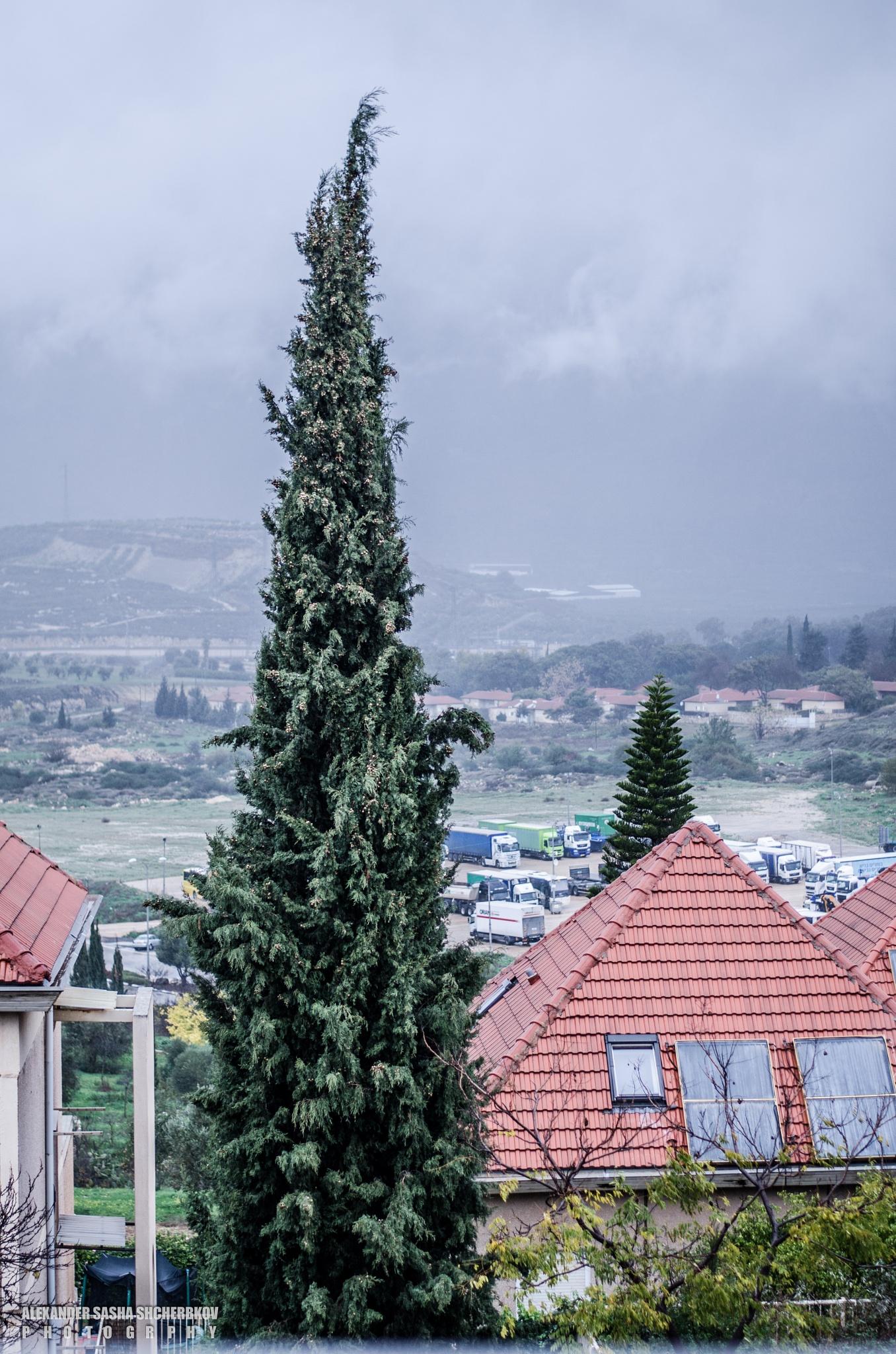 winter in the yard by Alexander Shcherbakov