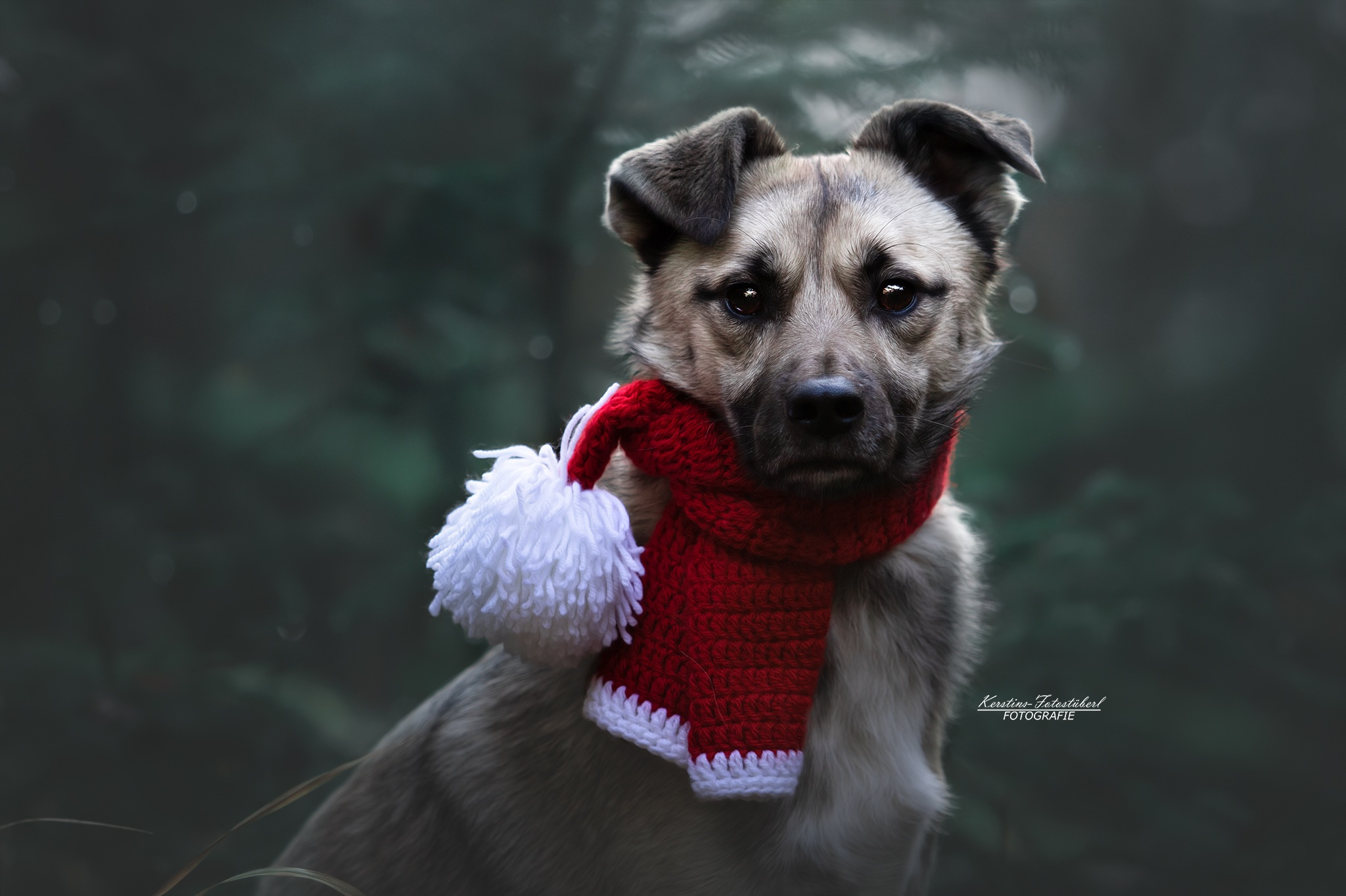 Santa Dog by KerstinsFotostueberl