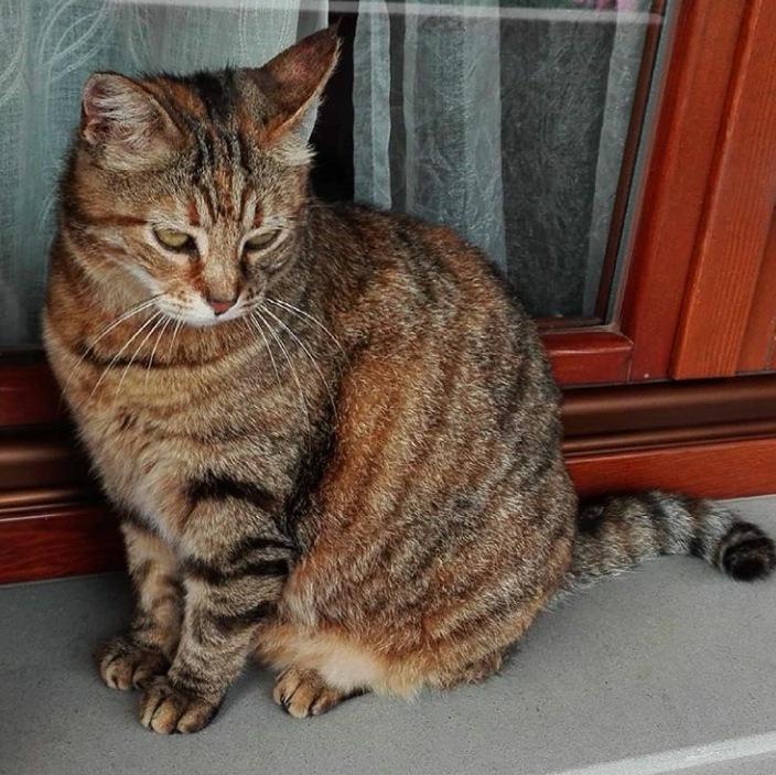 Kitty  by Valentina