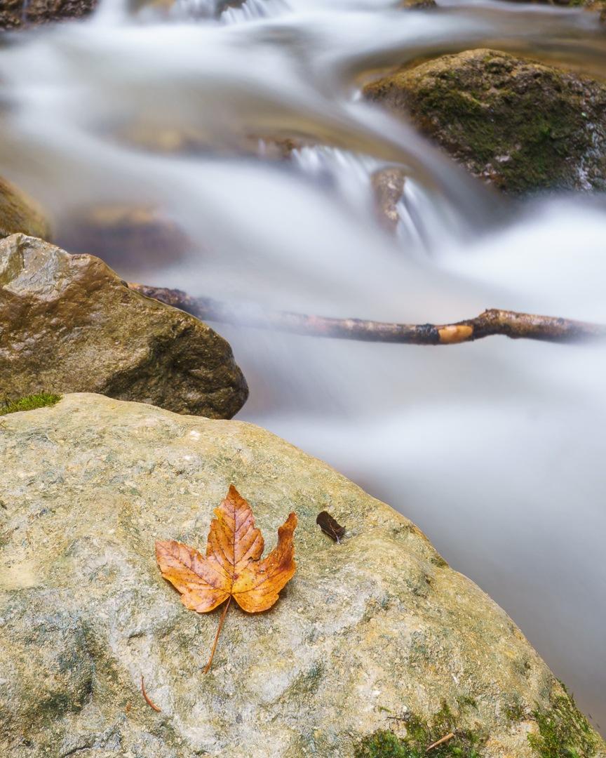 orange leaf by Roland Hackl