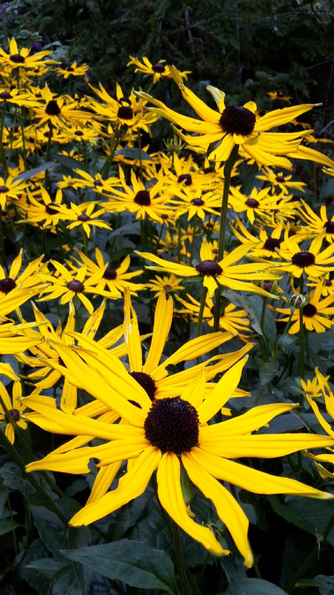 Yellow flowers by chiaravilla95
