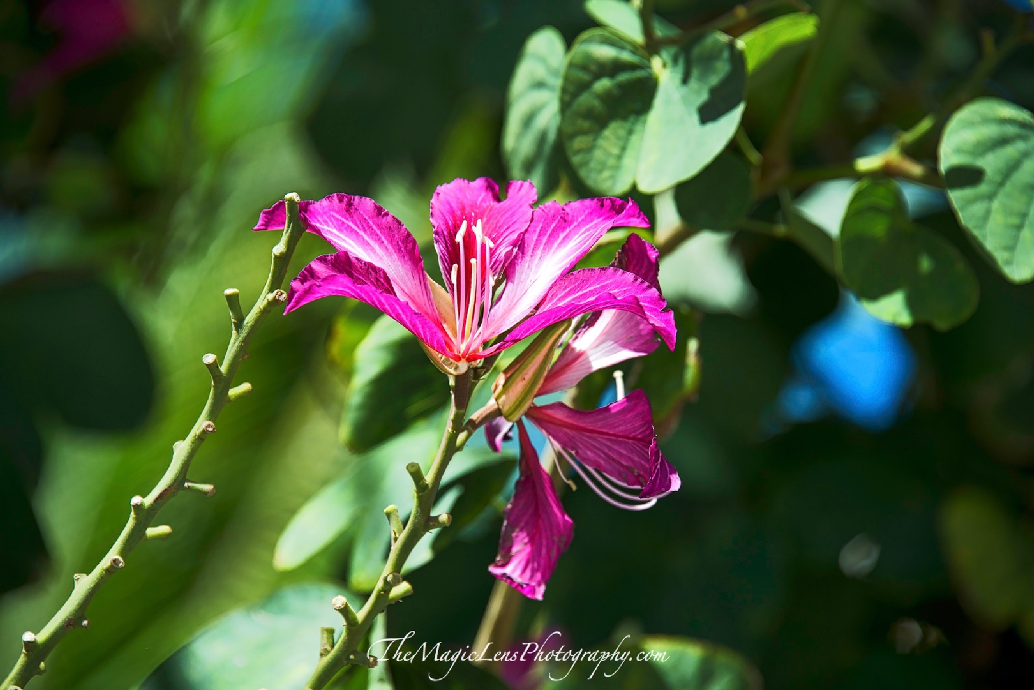 Wild Orchid by themagiclensphotography