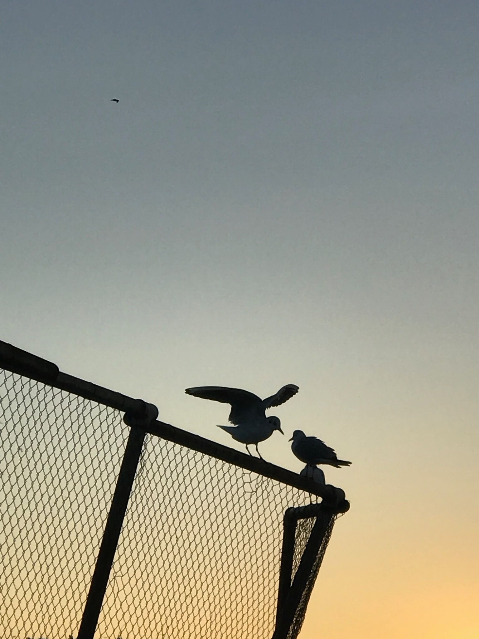 two birds by George Askounis
