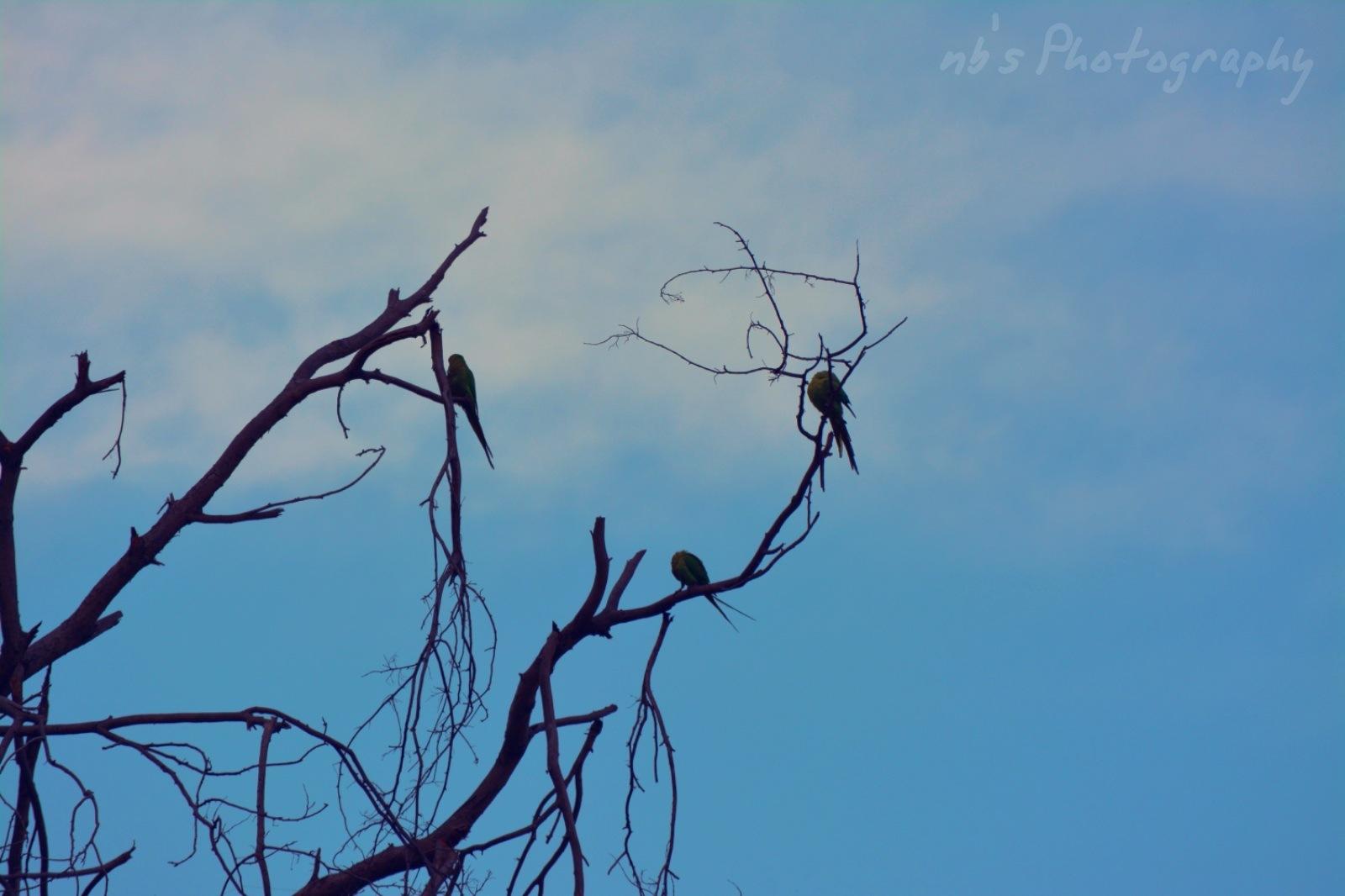 Untitled by neerajaashvi