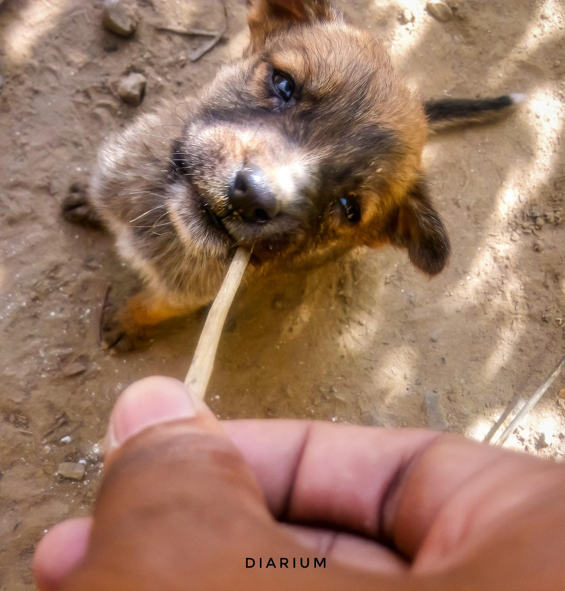 Puppy love by AKSHIT SAXENA