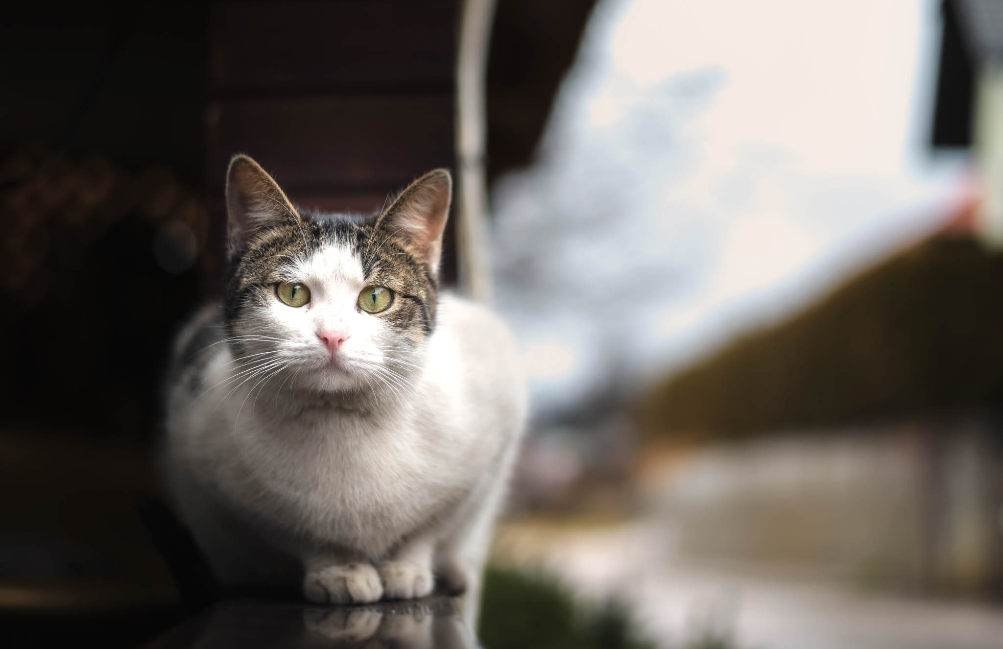 Local Kitty by MToomazic