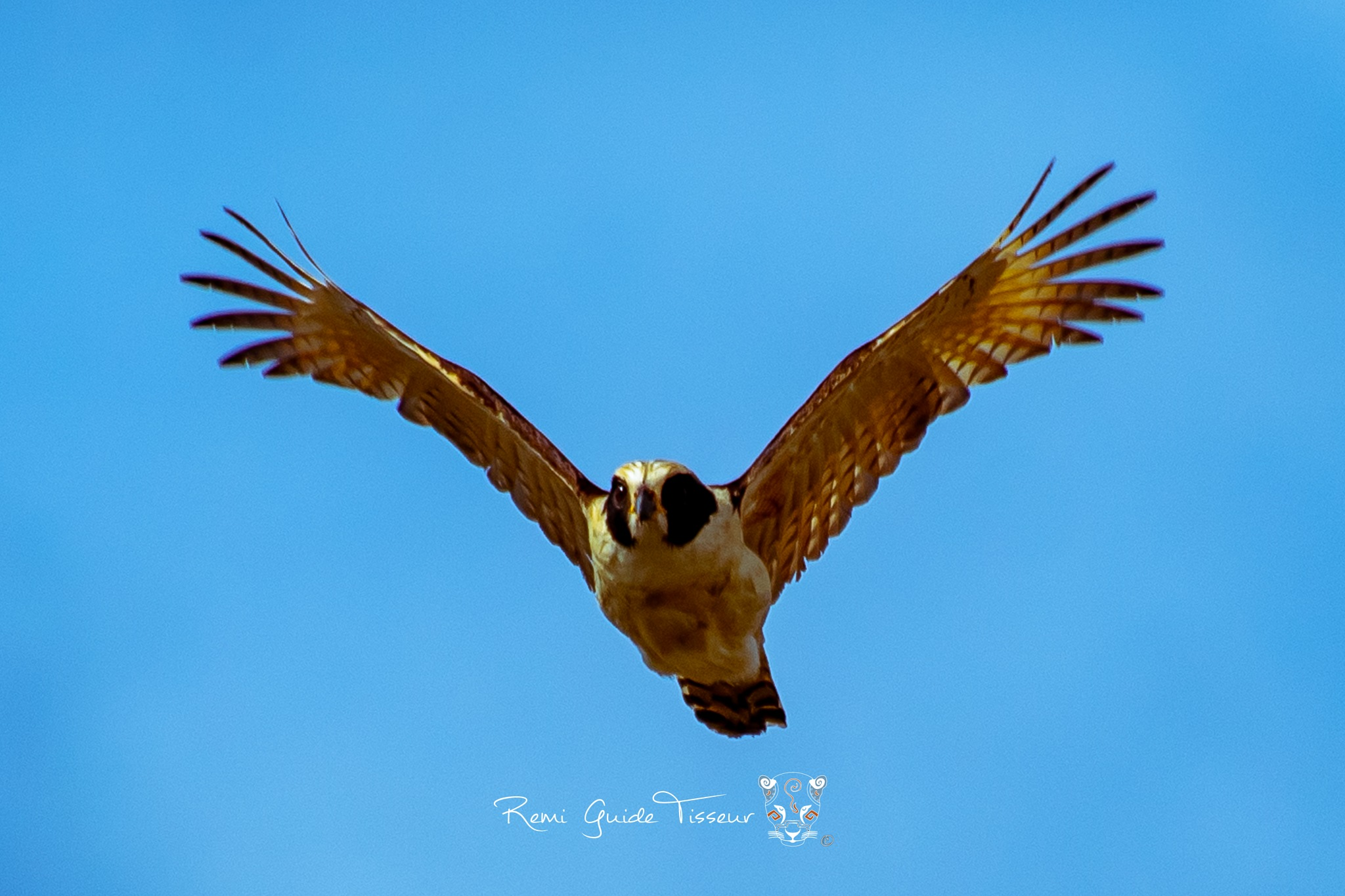 Photo in Animal #mexico #chiapas #south #flying #light #moving #animal #bird #wildlife #wild #travel