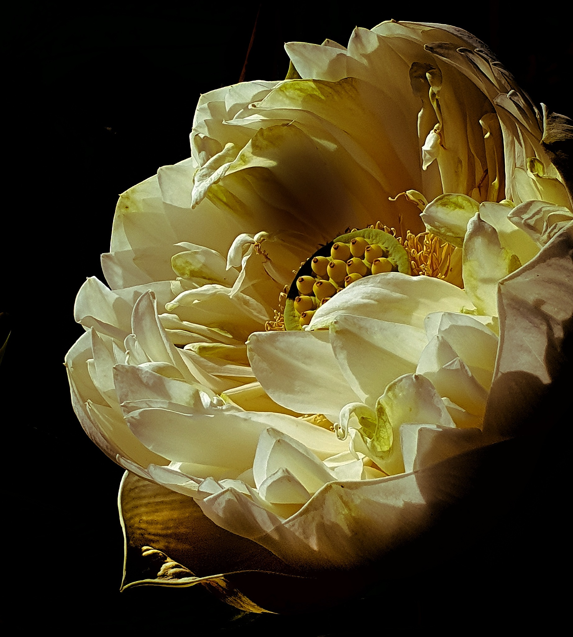 Good night !! by Claudia Farolfi
