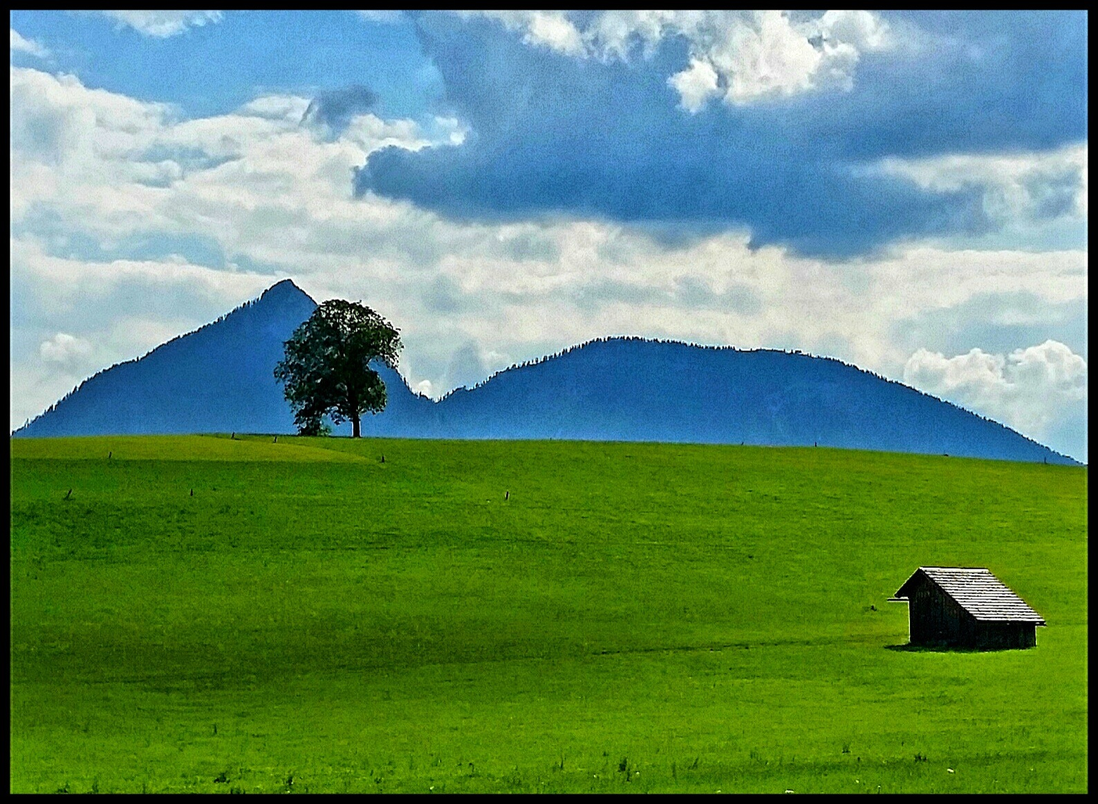 The house and a tree.. by Claudia Farolfi