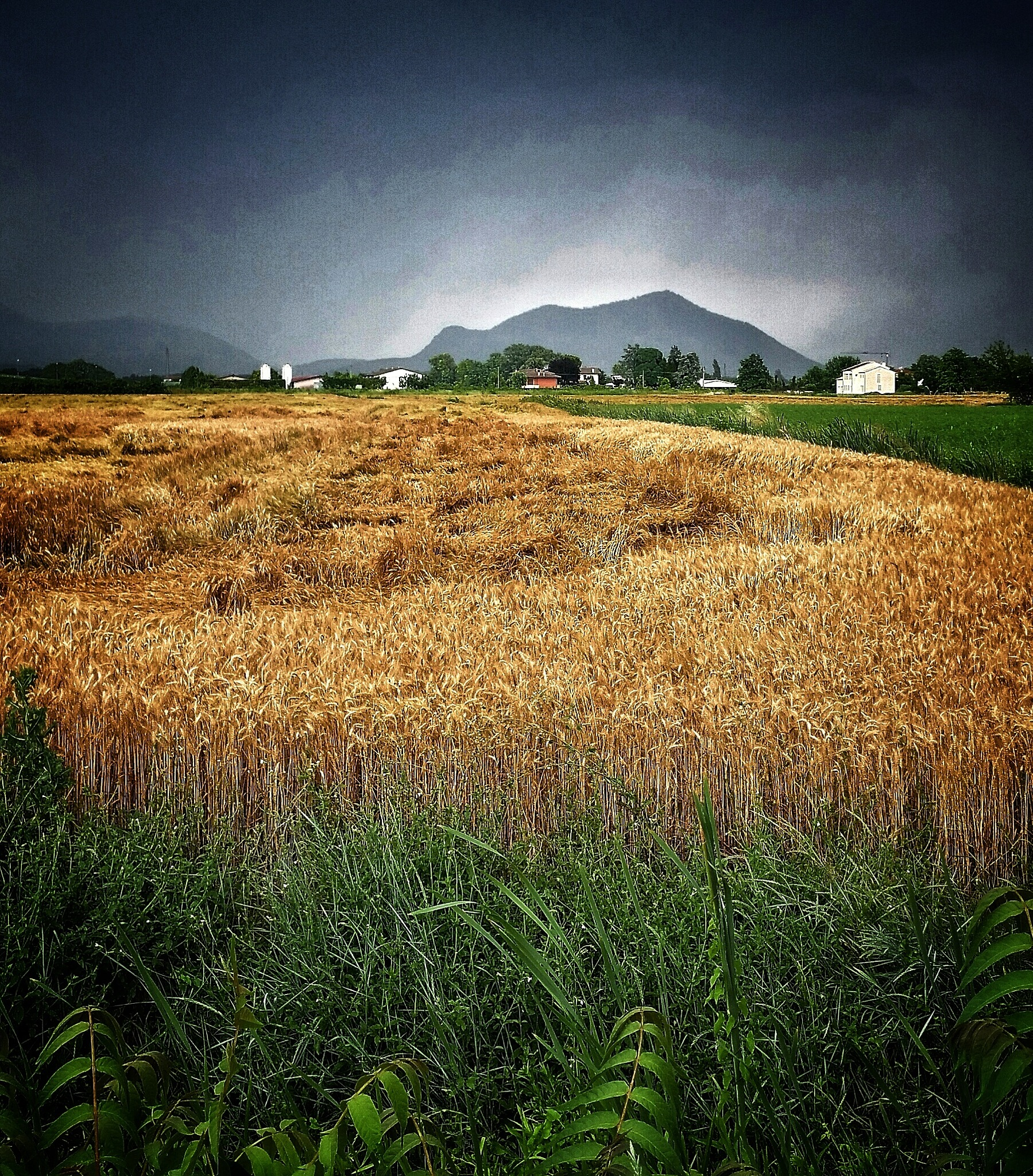 Wheat field after a storm by Claudia Farolfi