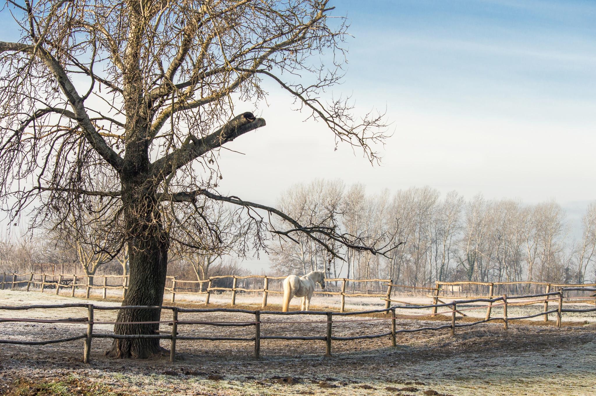 Frozen white morning by Sebastijan Kovac