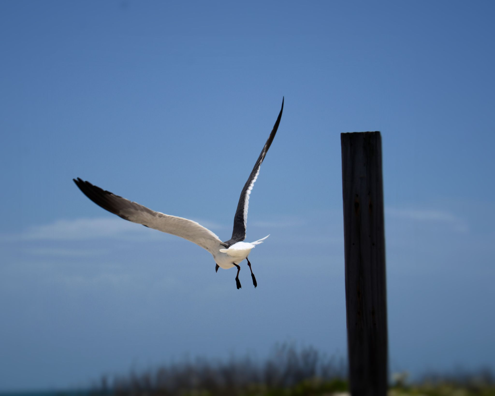 North Padre Island 1 by Alex Young