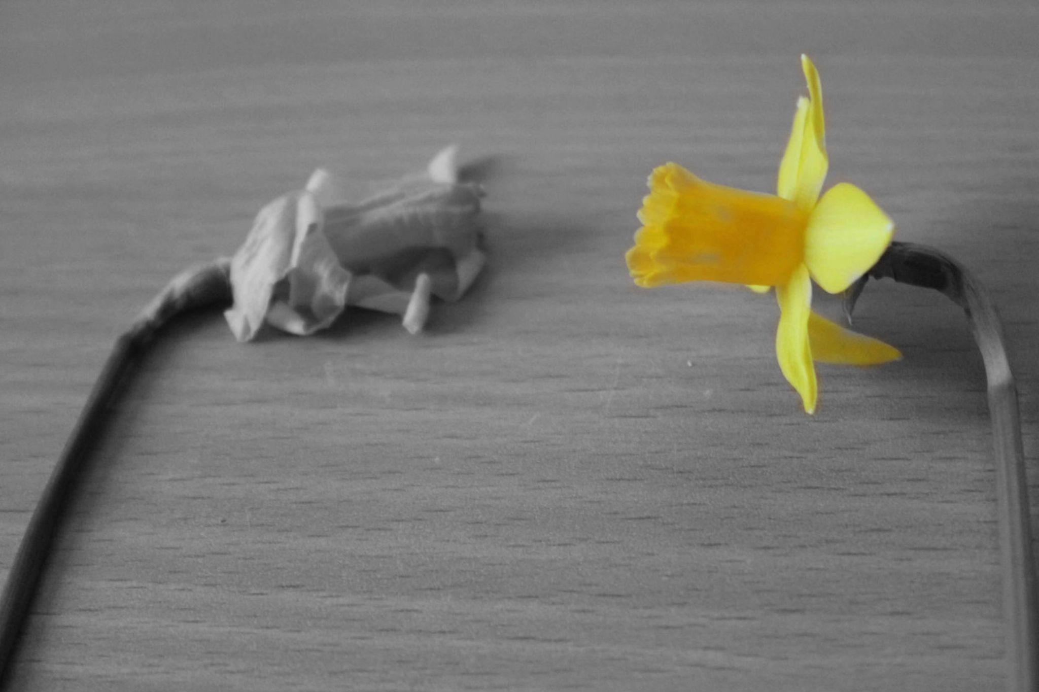 flower power by Denise Linder