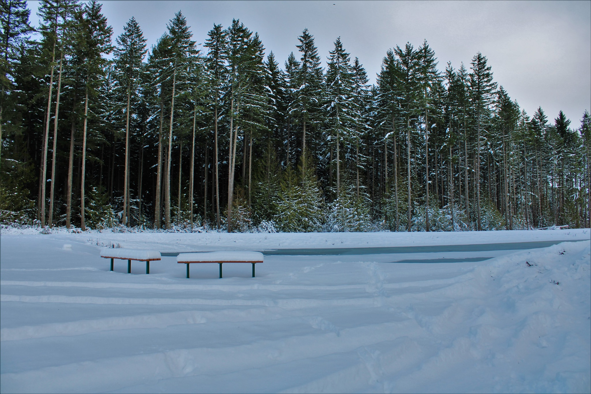 Photo in Nature #nature photography #frozen pond #winter #snow #landscape #scenic view #trees #forest