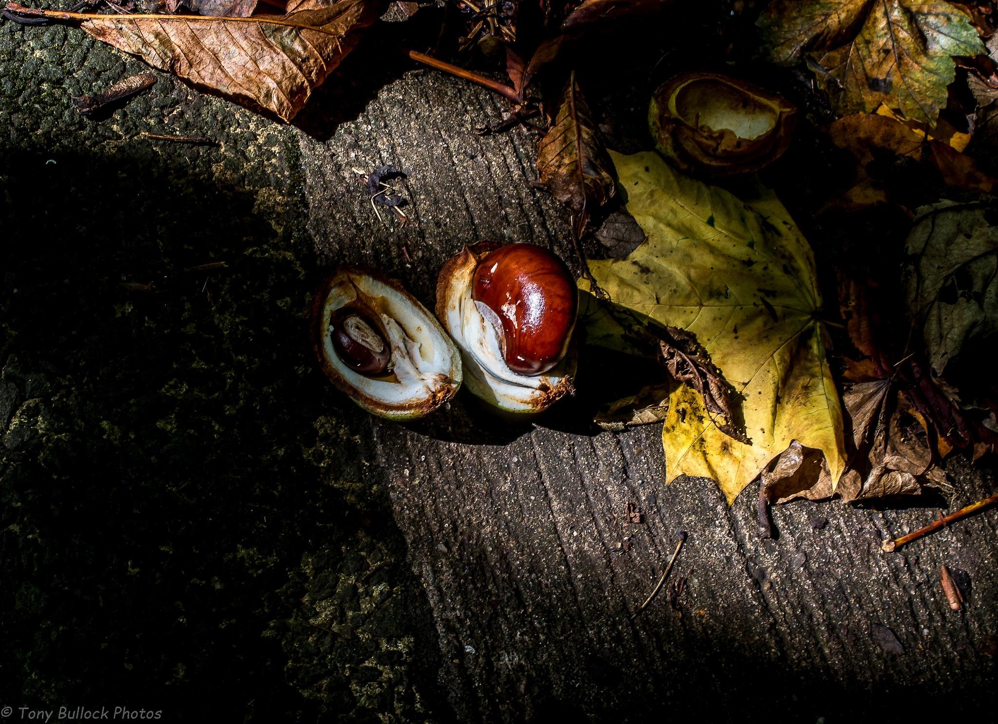 Untitled by TonyBphotos