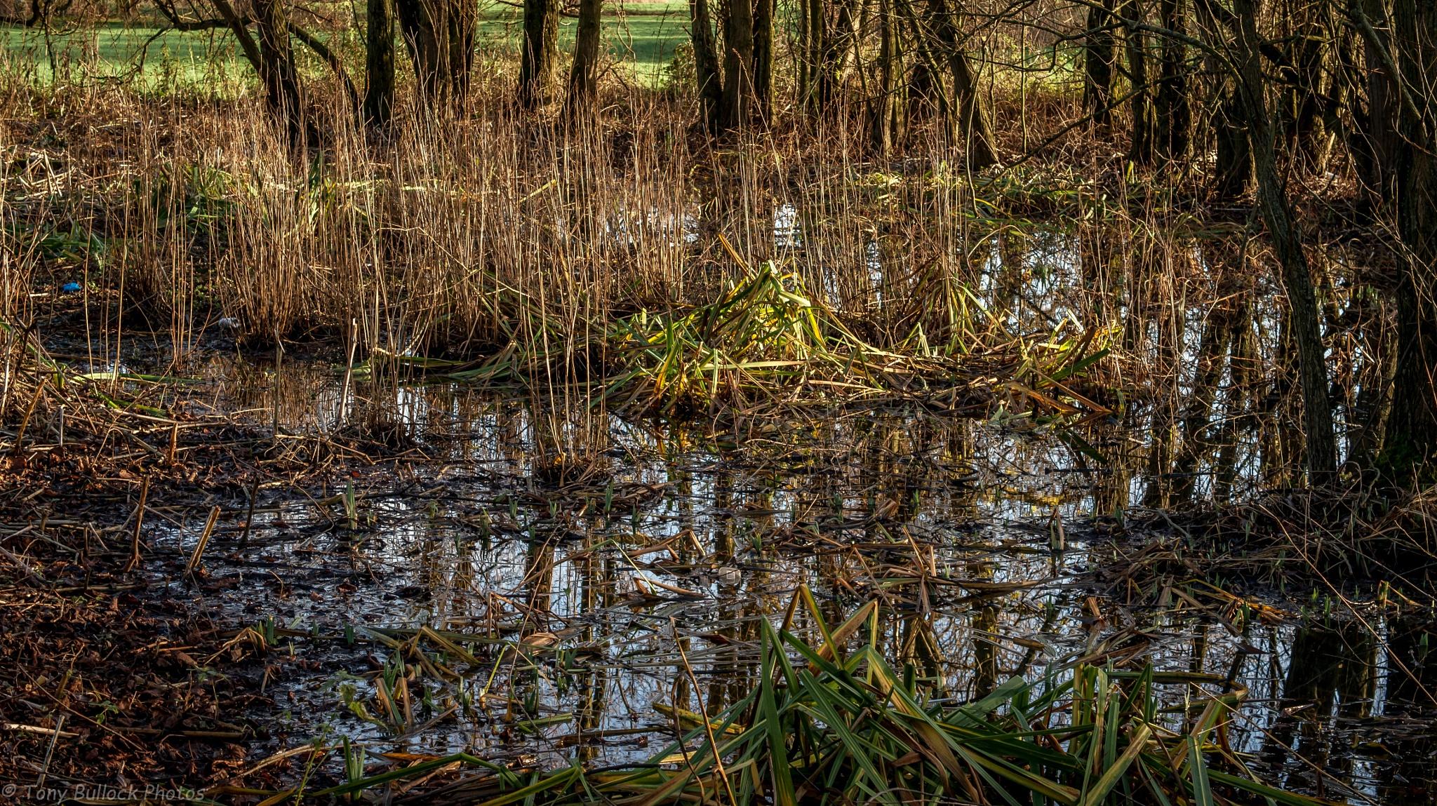 Washlands reflection by TonyBphotos
