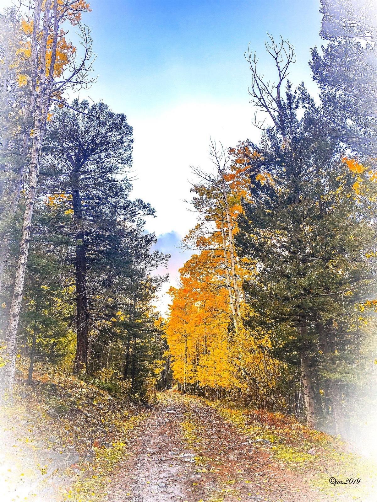 Autumn Walk by JW