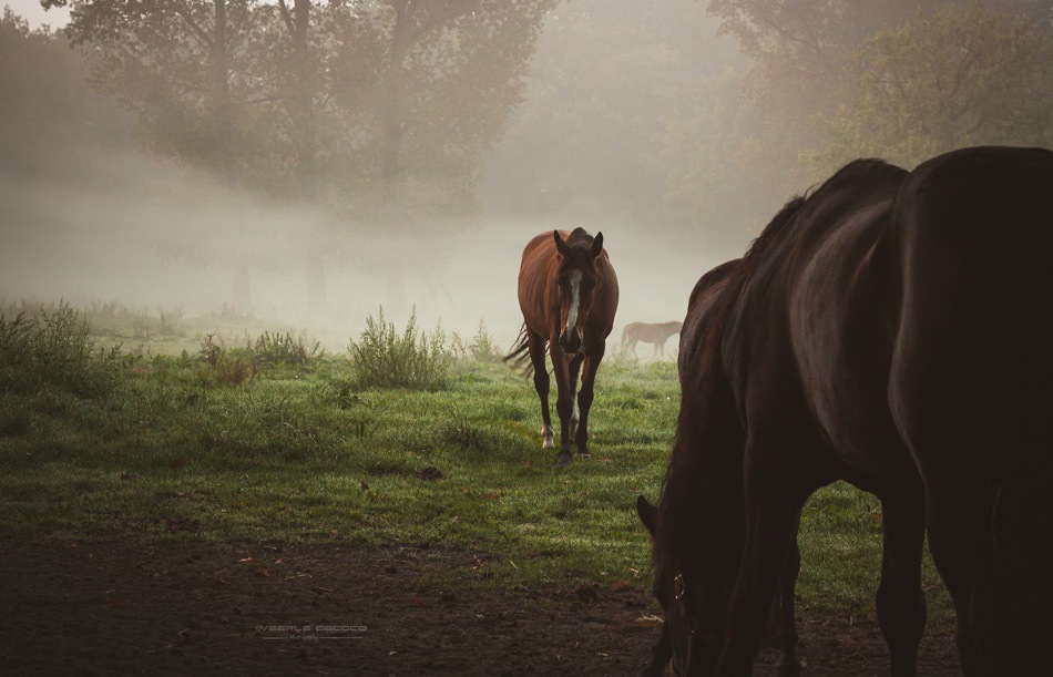 one morning... by Veerle Decocq