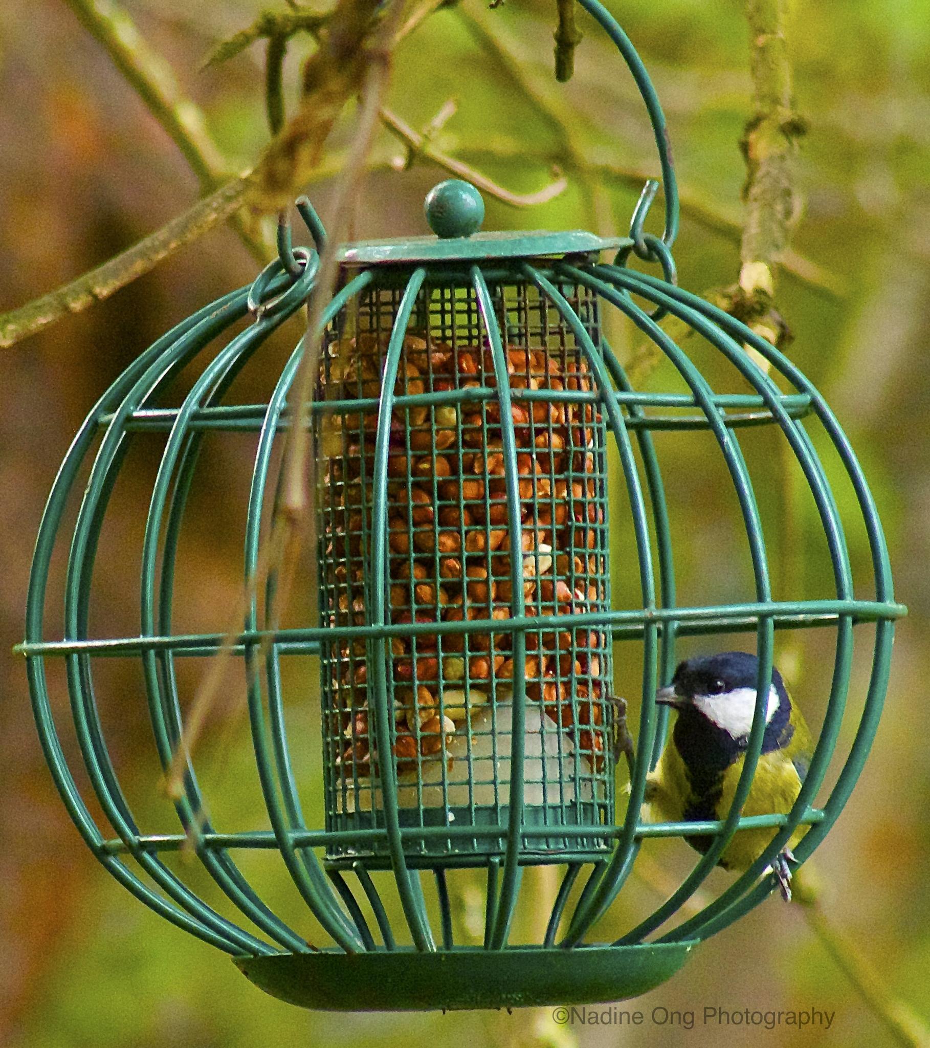 Photo in Nature #bird #colour #green