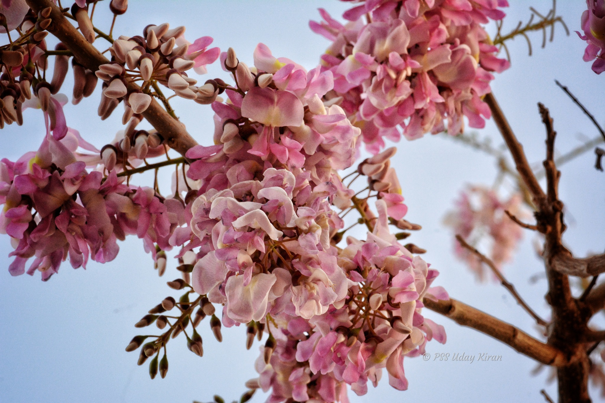Flowers, on trees, bring so much joy!  by Uday