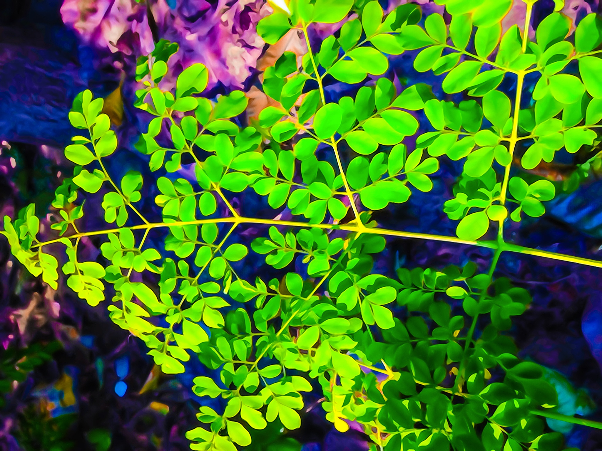 green leaves by soumitramaity39
