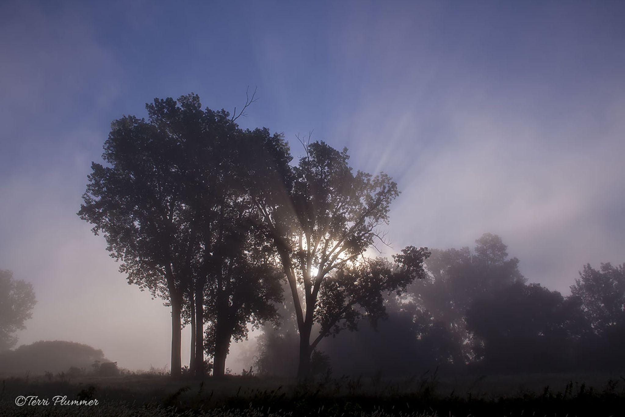 fog by Terri Plummer