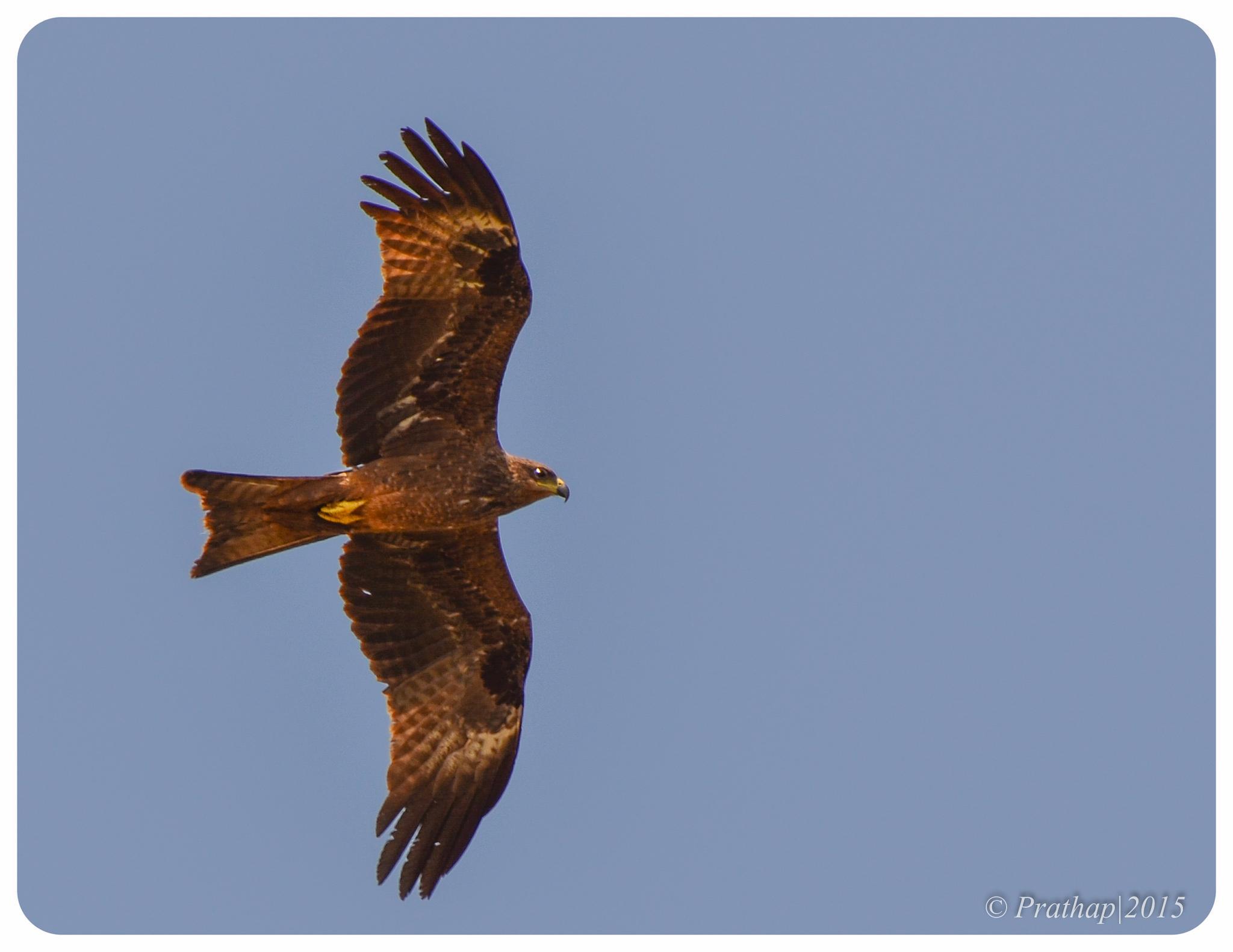 Fly High !! by Prathap Gangireddy