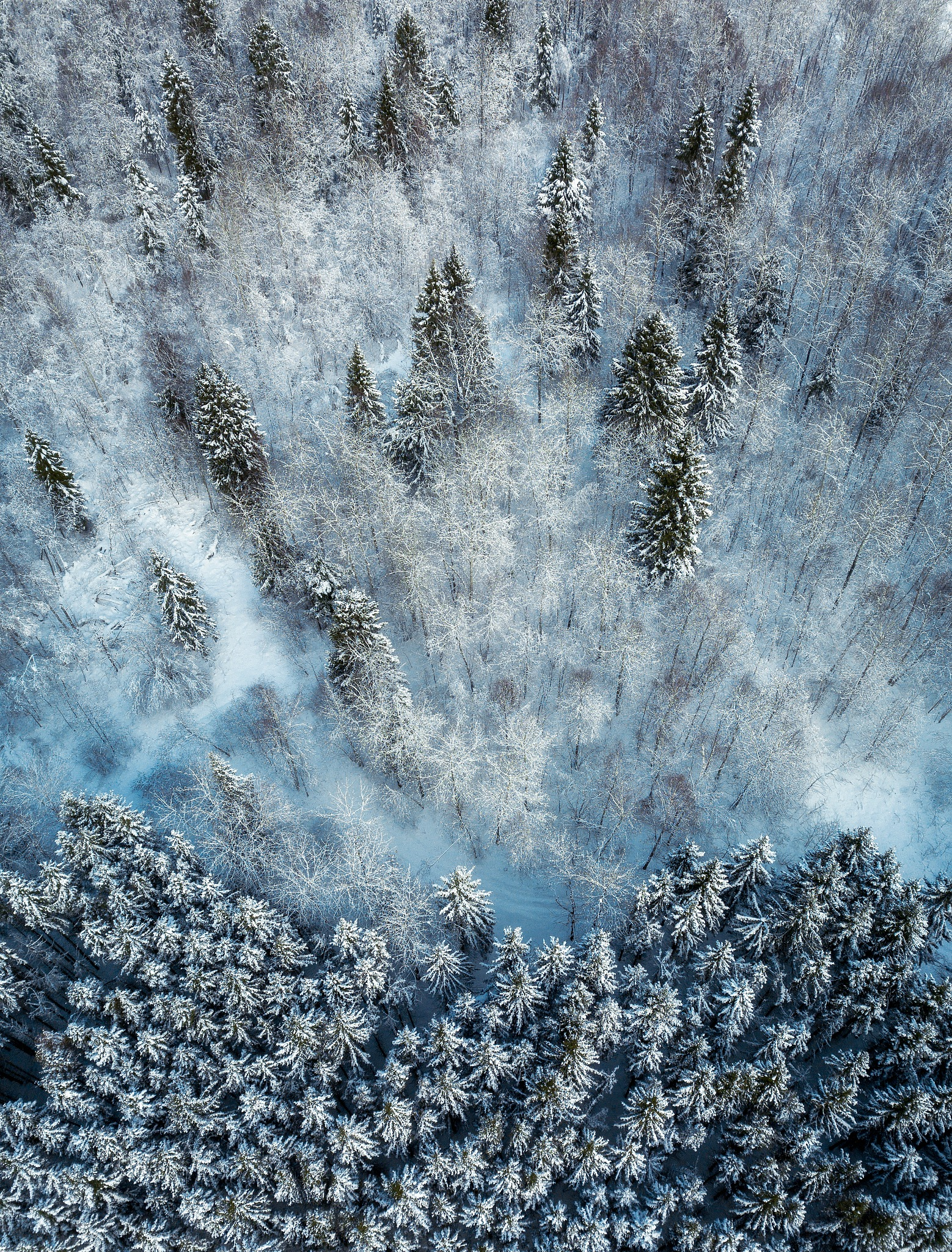 Photo in Aerial #landscape #nature #winter #forest #russia