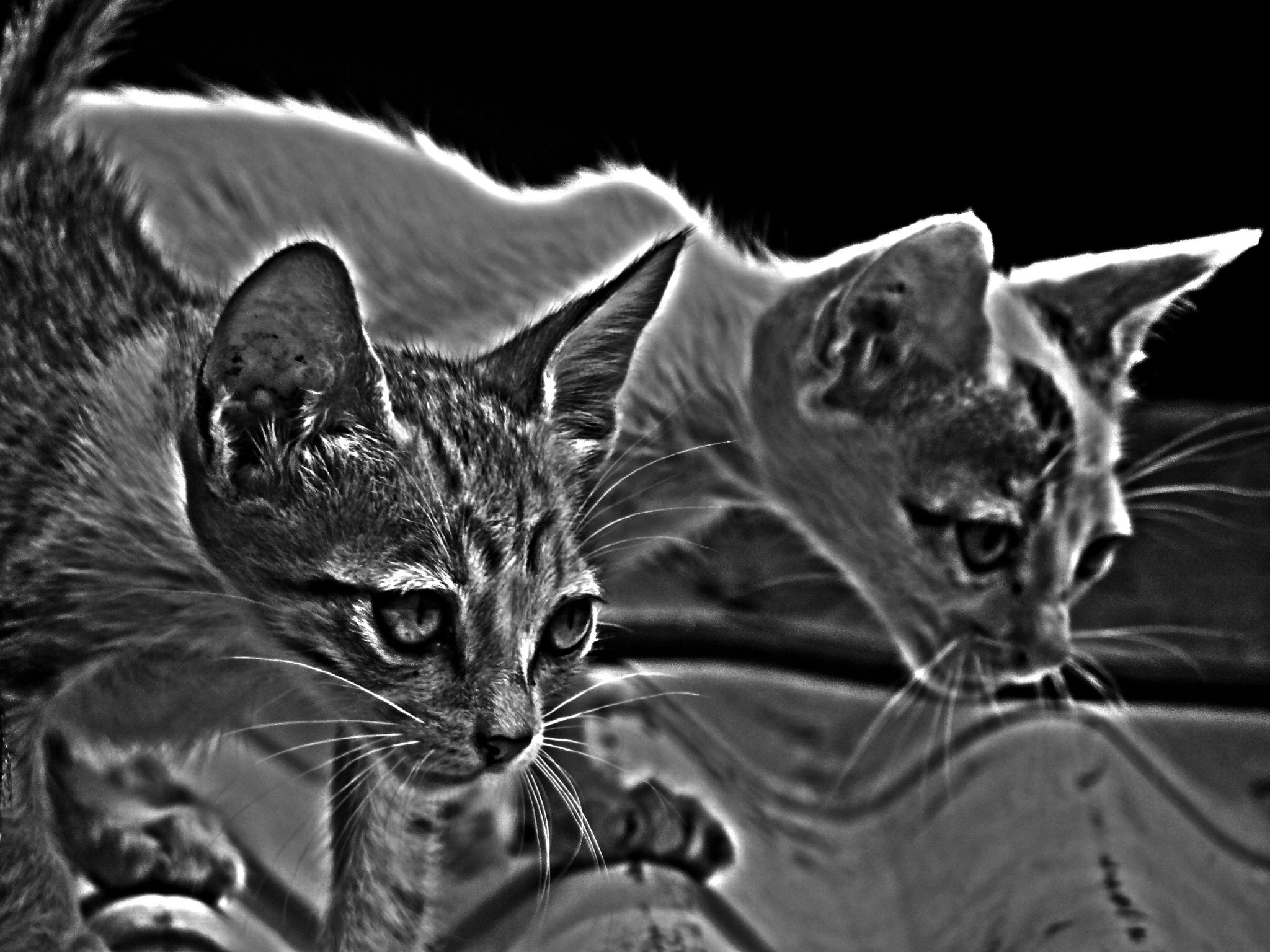 HDR Cute Cats  by Saurabh Gaikwad