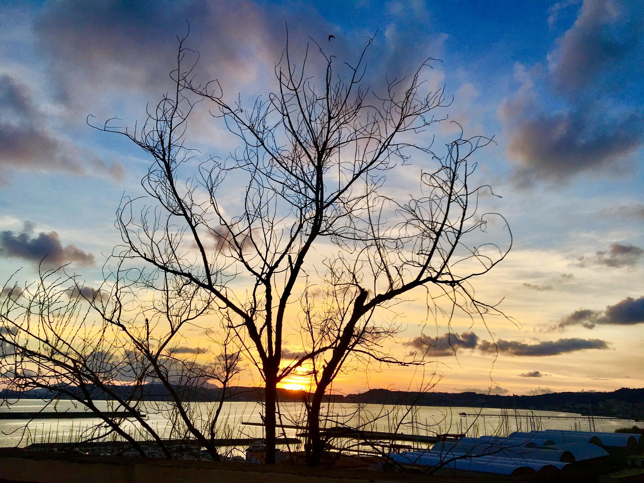 Photo in Nature #bagnoli #italy #naples #italia #mare #sea #mar #winter #tree #albero #sky #cielo #panorama