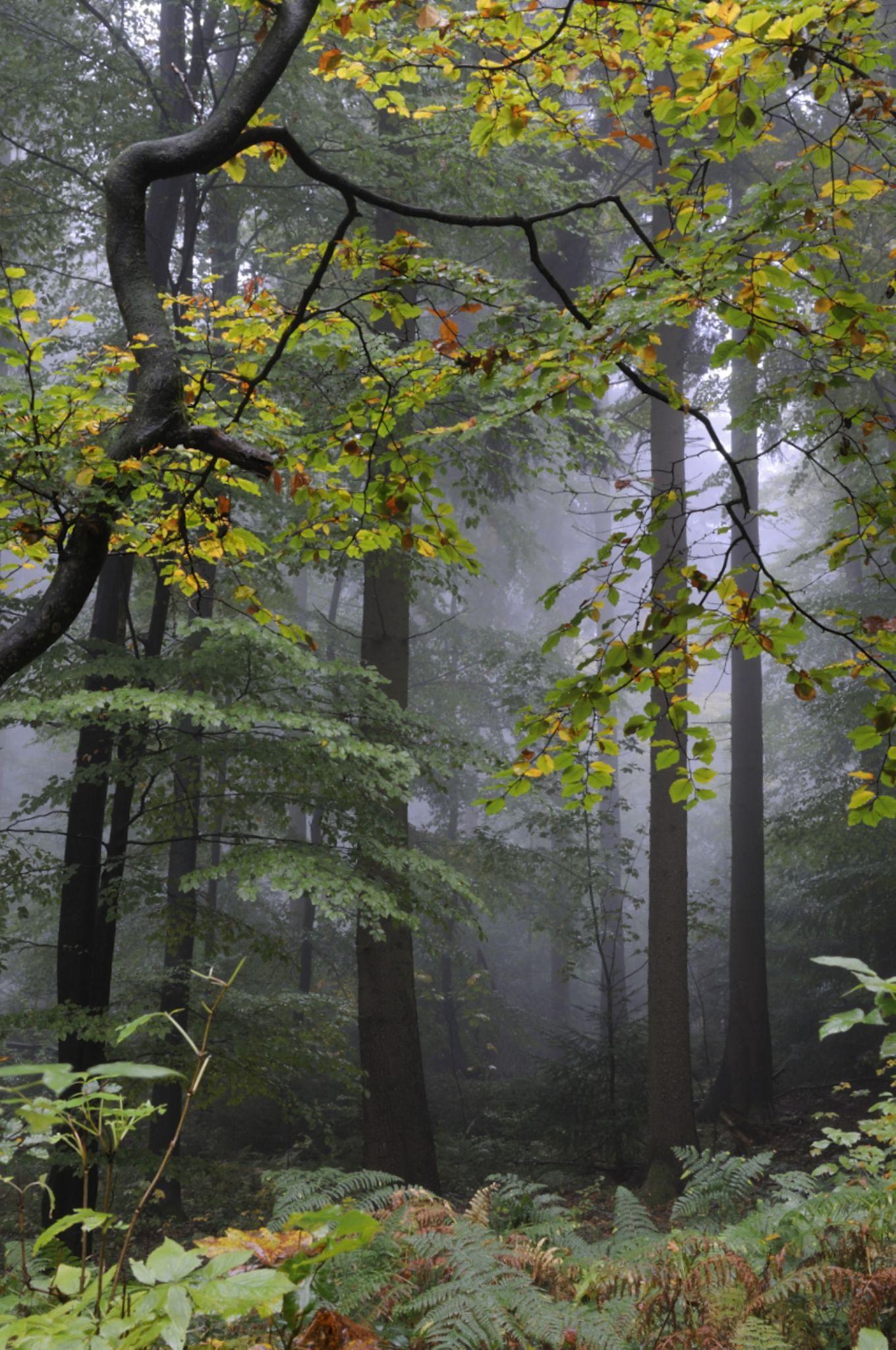 Heidelberg forest by Valdemar Ferreira Junior