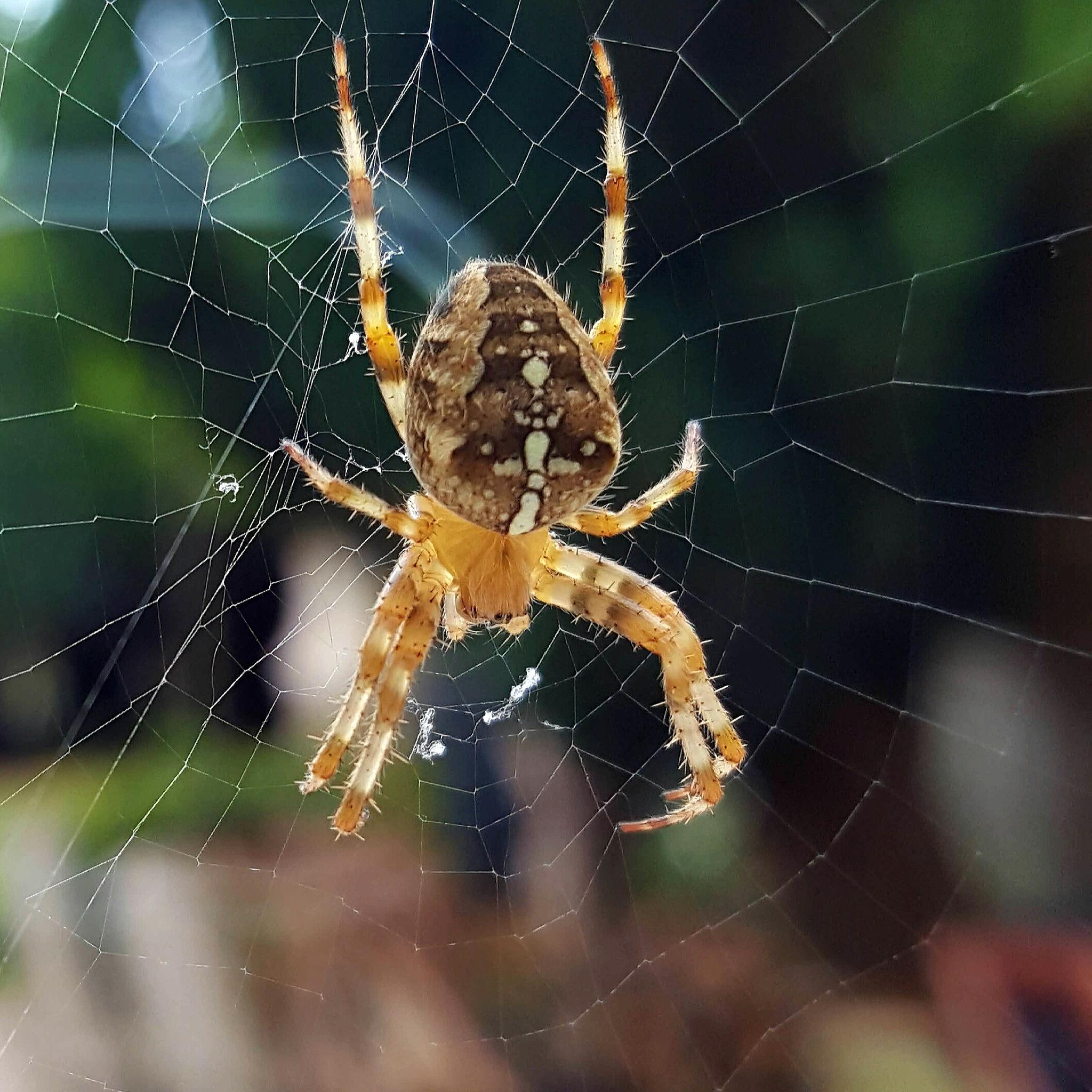 Autumn Spider by AnthonyLaverty