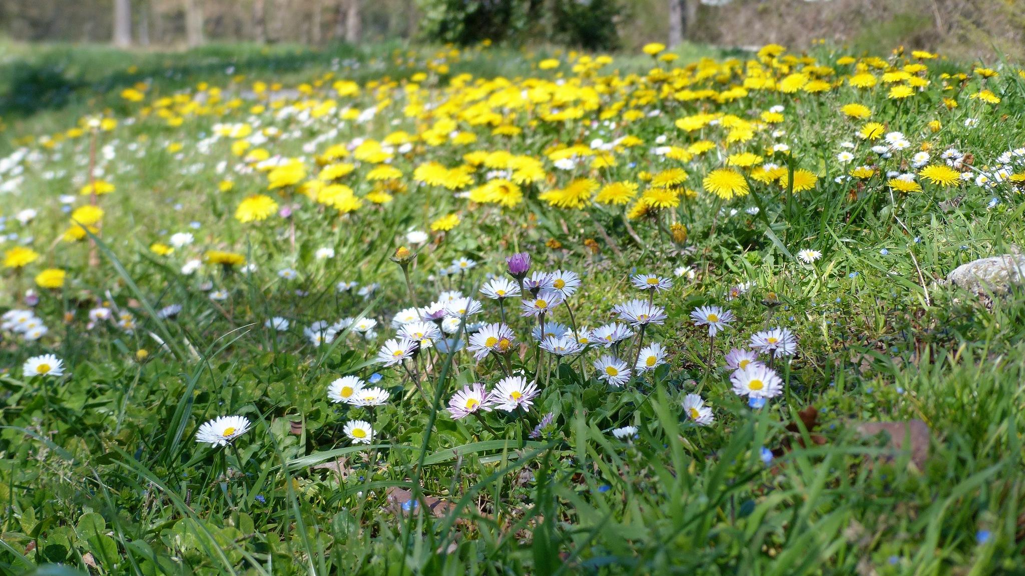 Spring flowers  by Jean François Ollivier