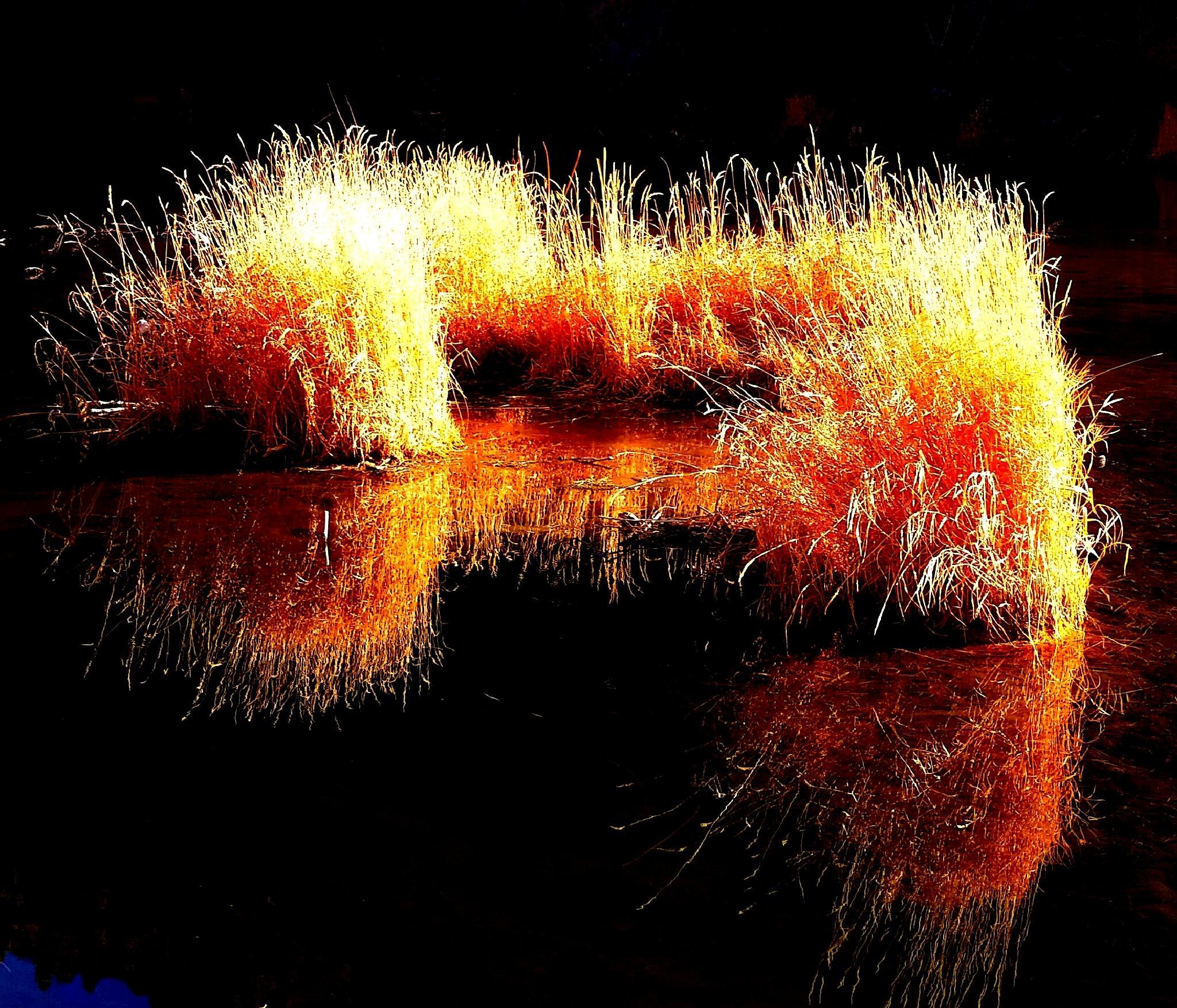 Golden Light..... by Garth Rogers