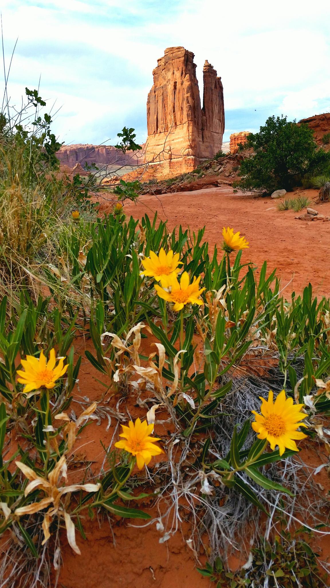 Desert Blossoms by Garth Rogers