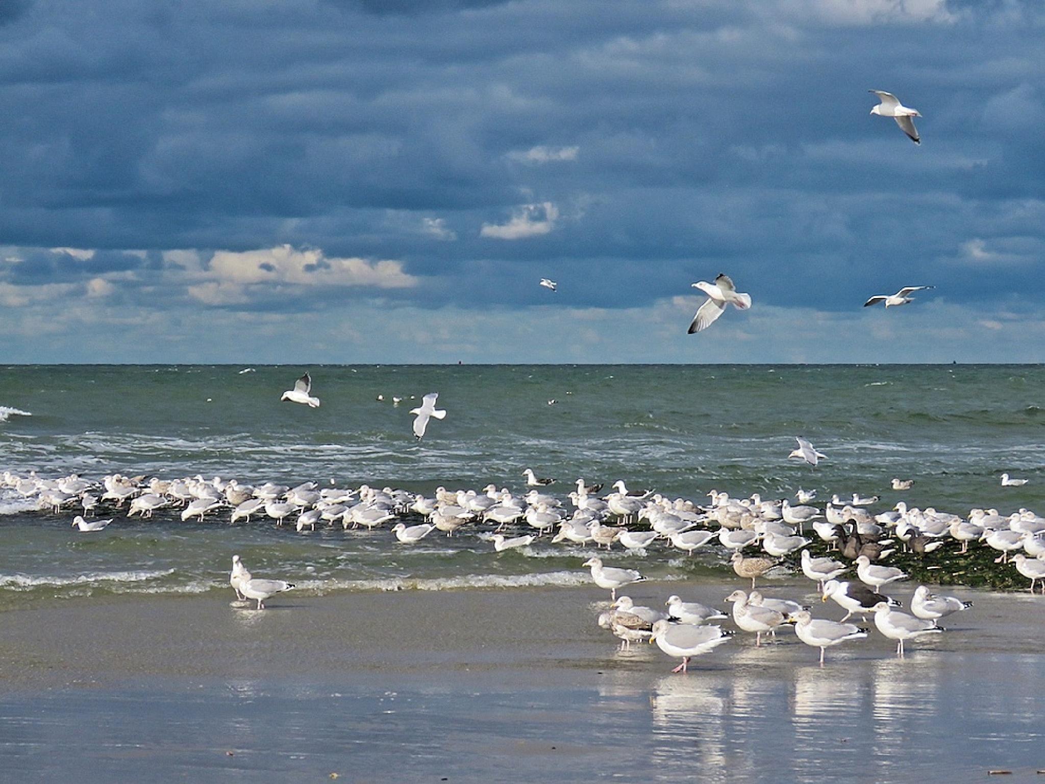 Seabirds by richtlycklamaanijeholt