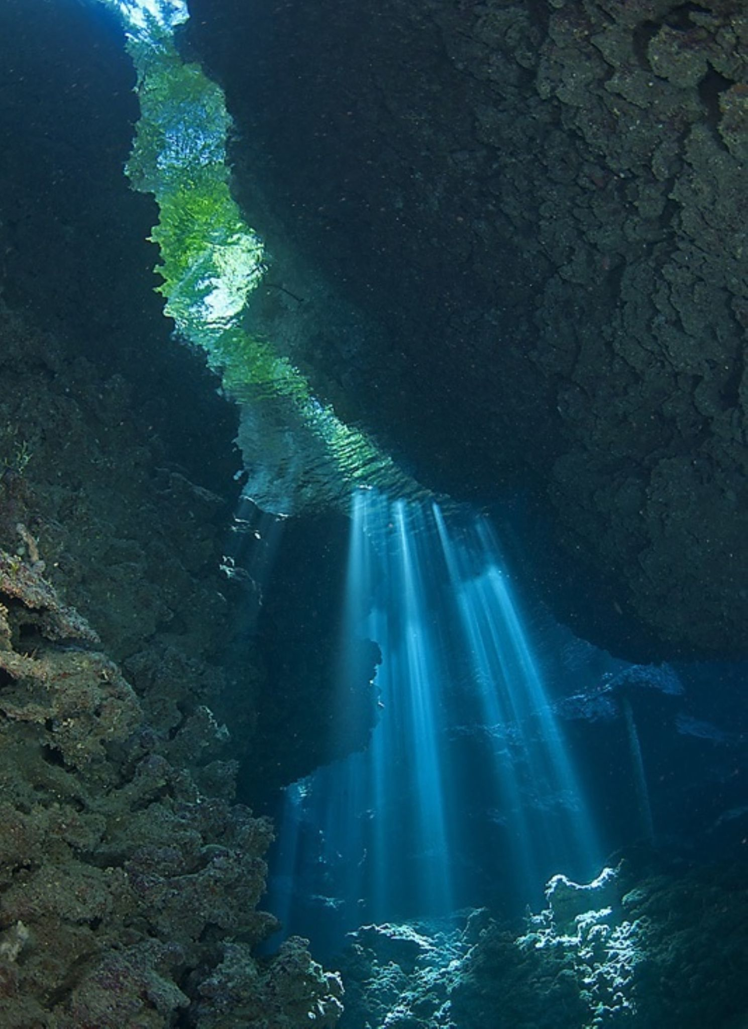 Shark Cave by Tony Brown