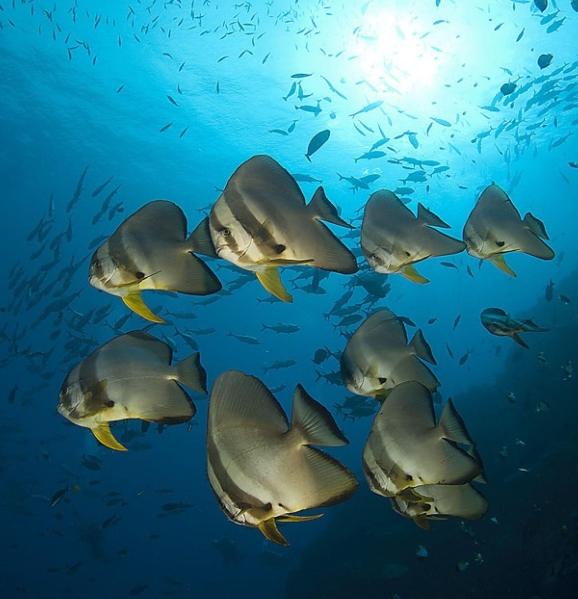 Bat Fish by Tony Brown