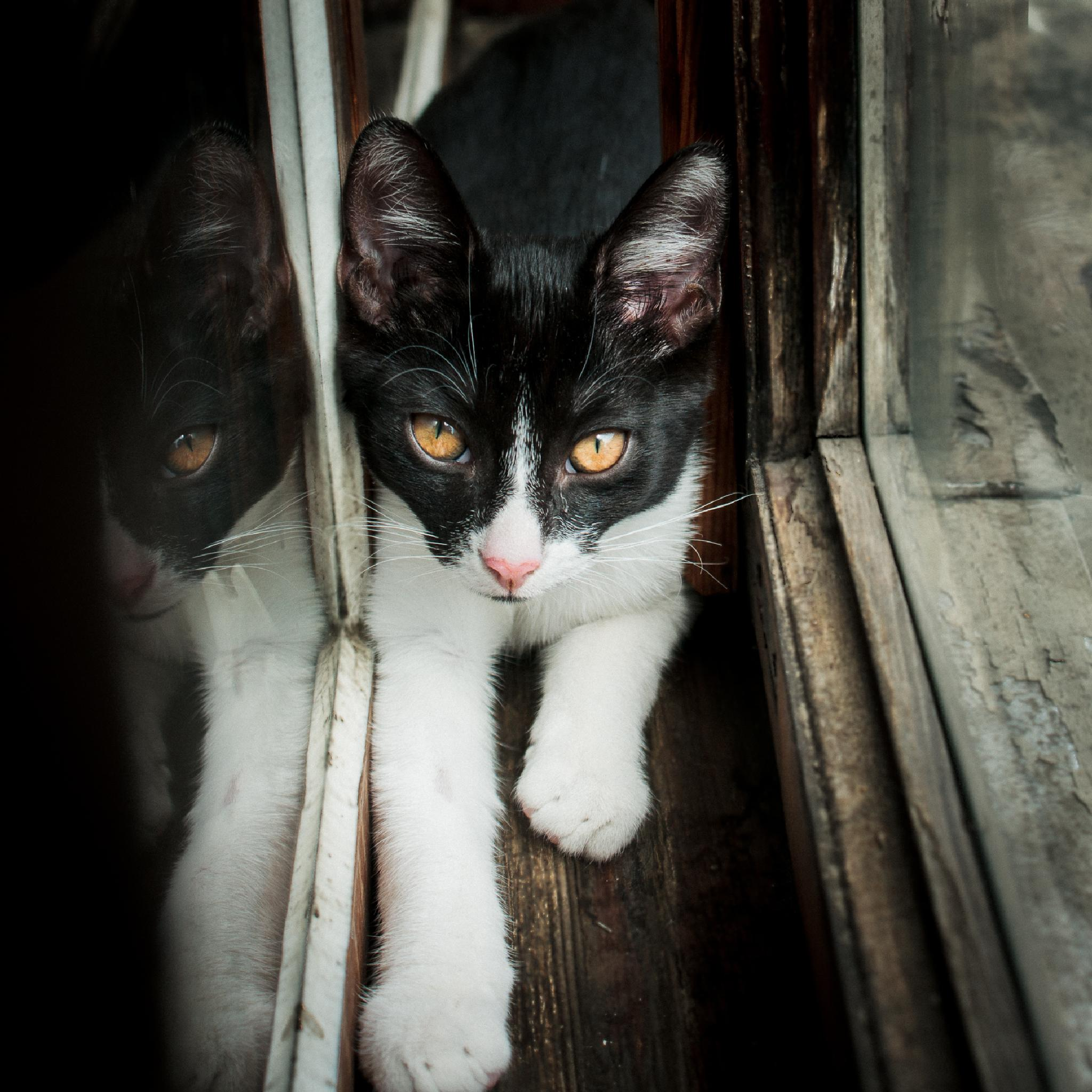A young cat and an old window II by nataliadab
