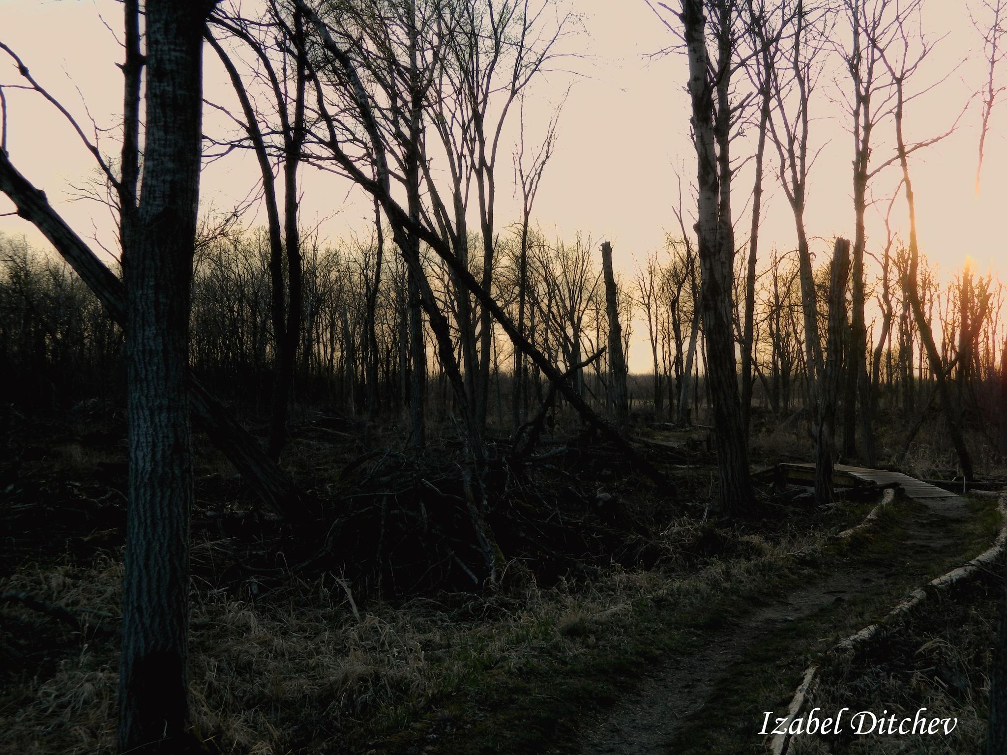 Untitled by Izabel Ditchev