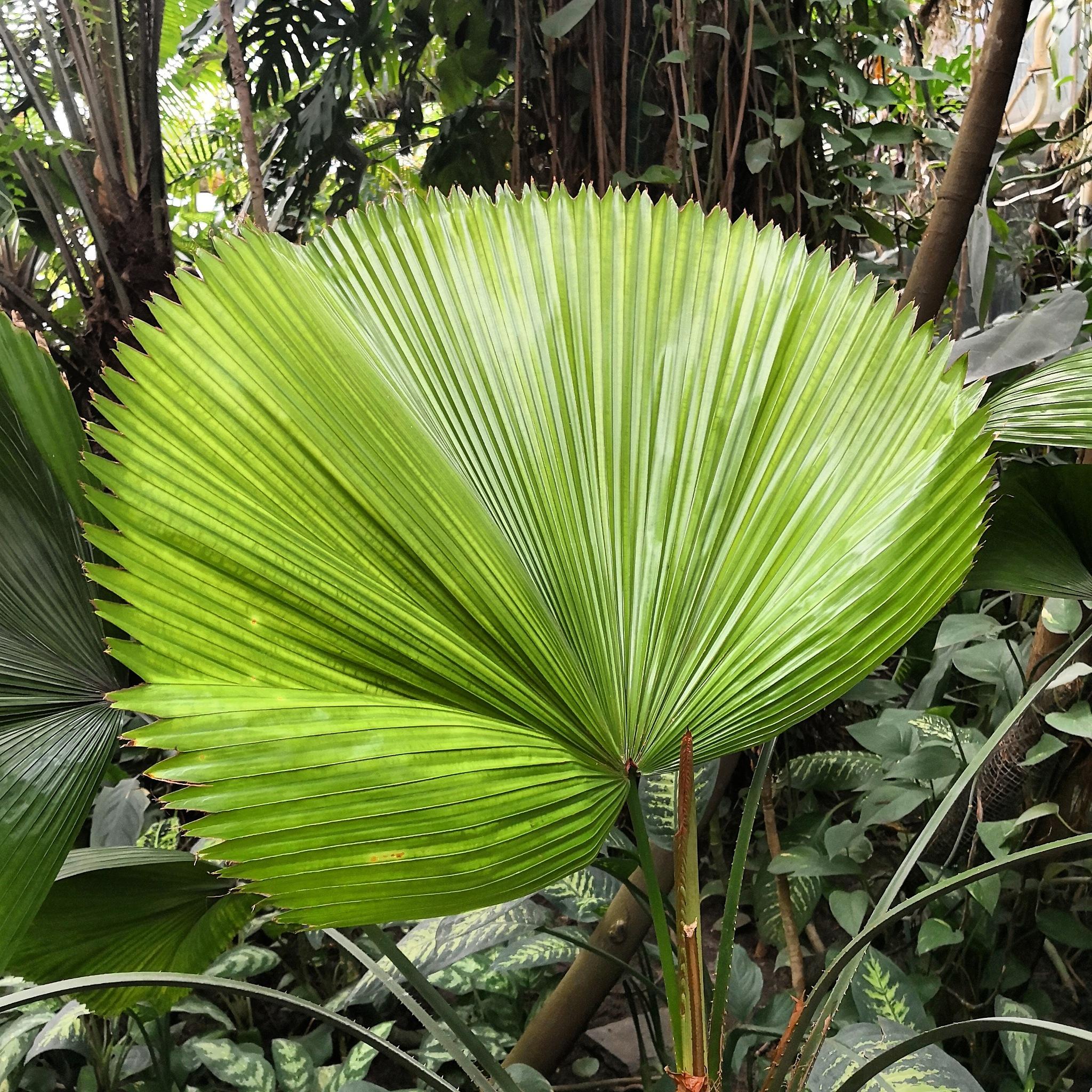 liść, palma, zieleń by Renata Koczurek