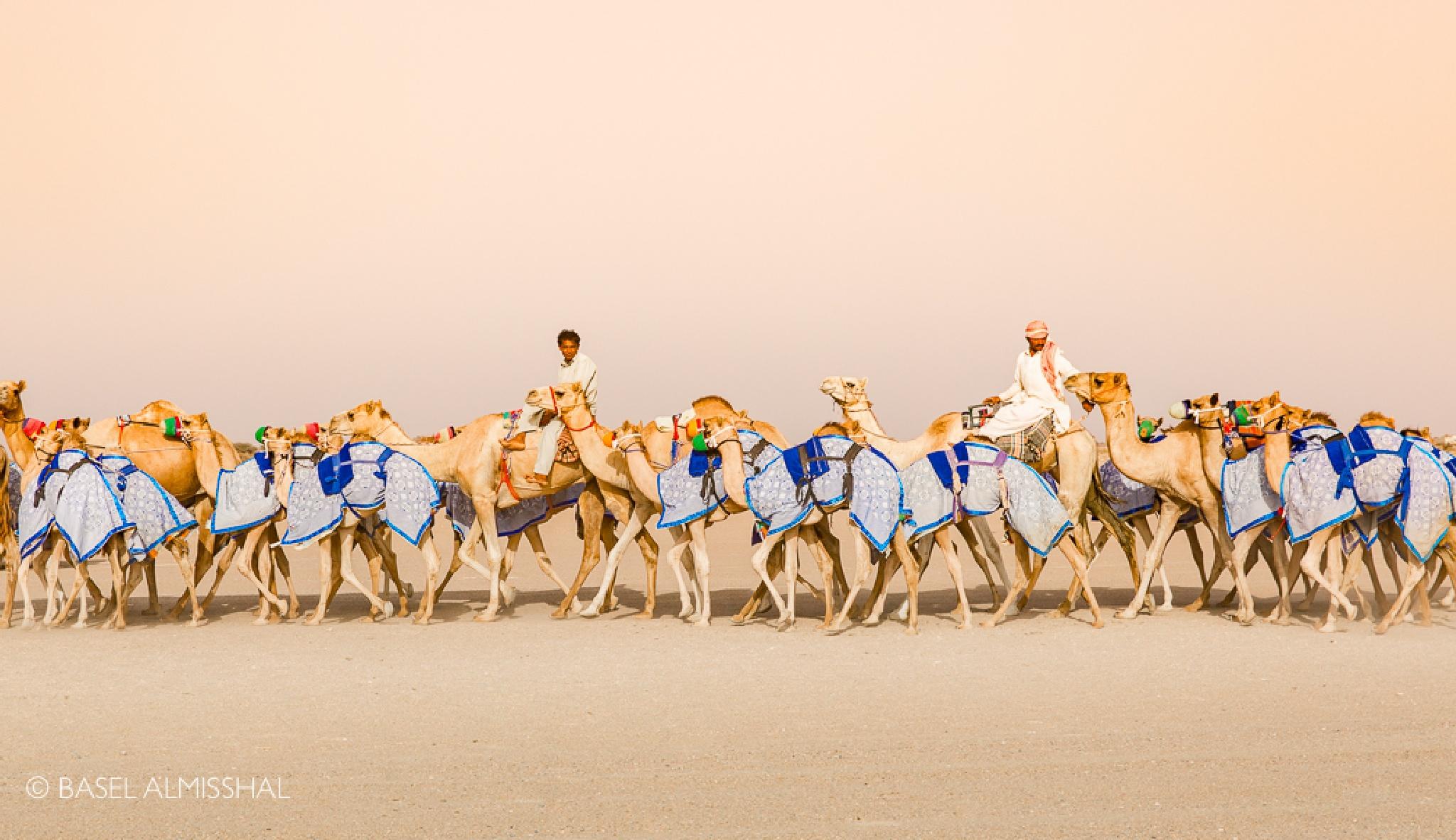 Camels by Basel Almisshal