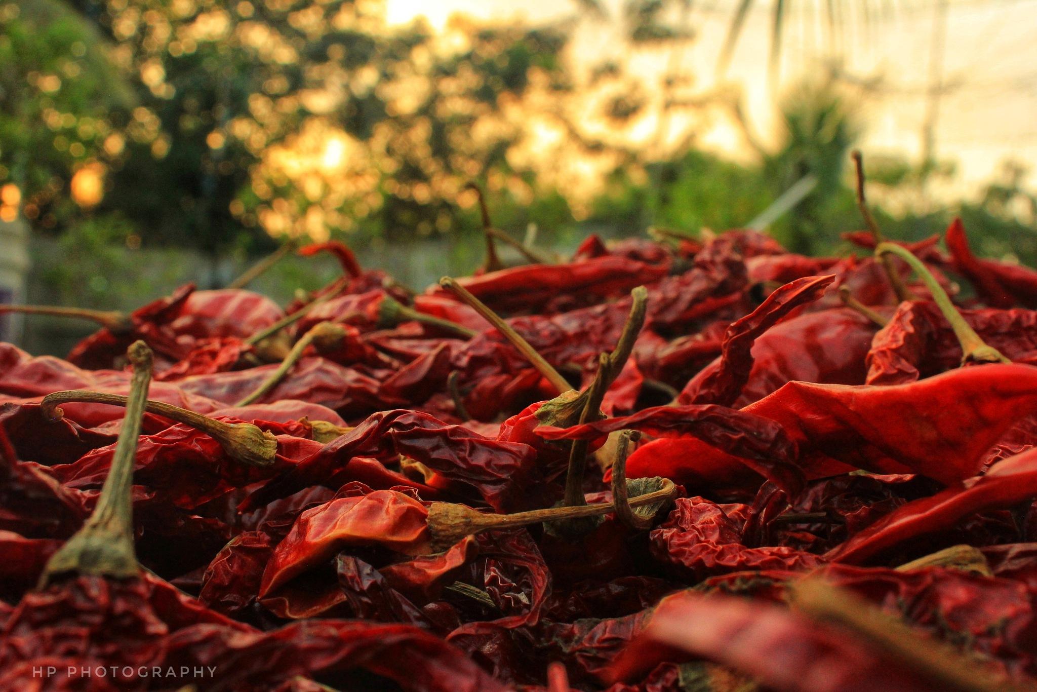 Chilli  by Hari Prasad